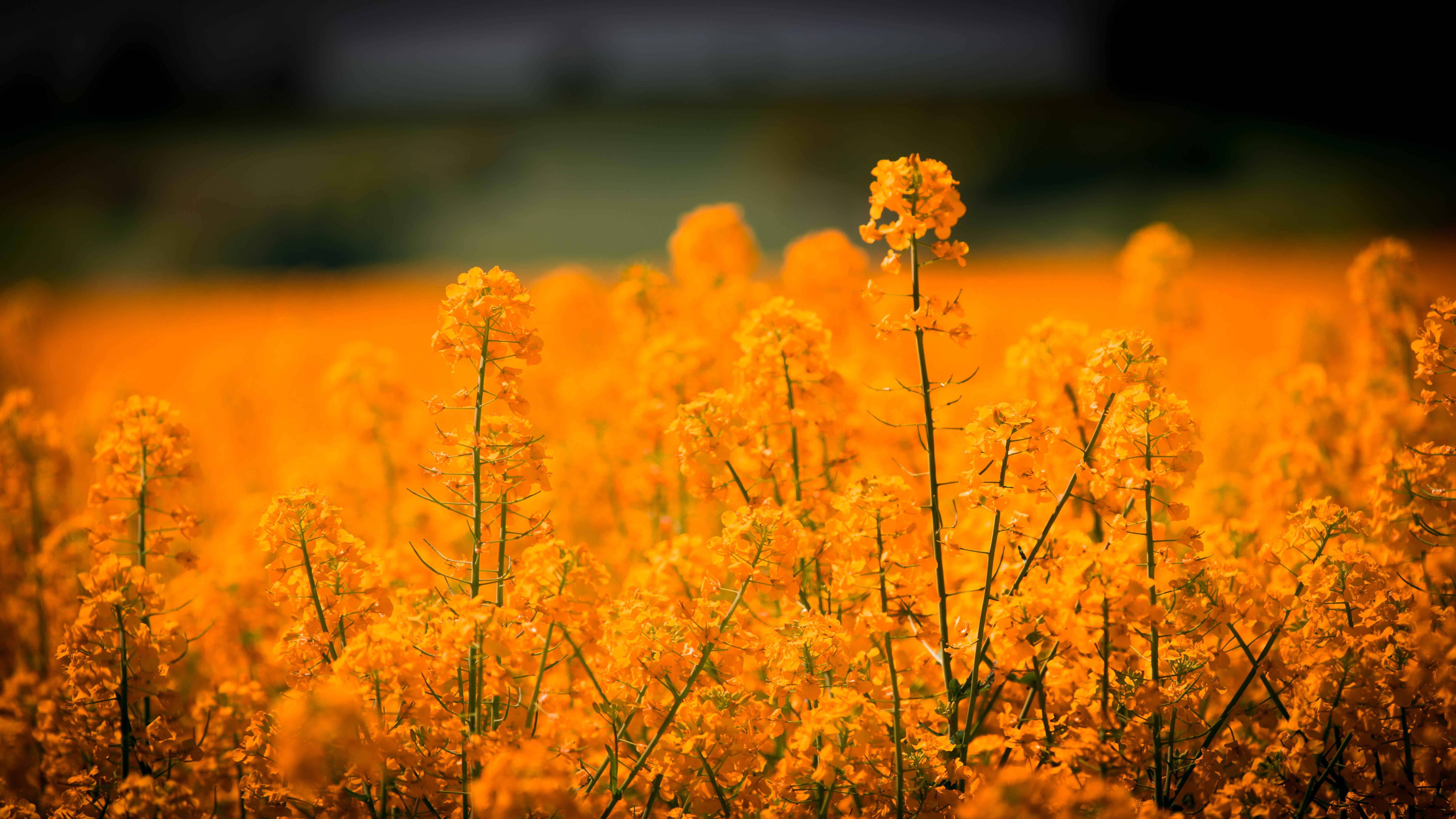 плантация зелень закат поле без смс