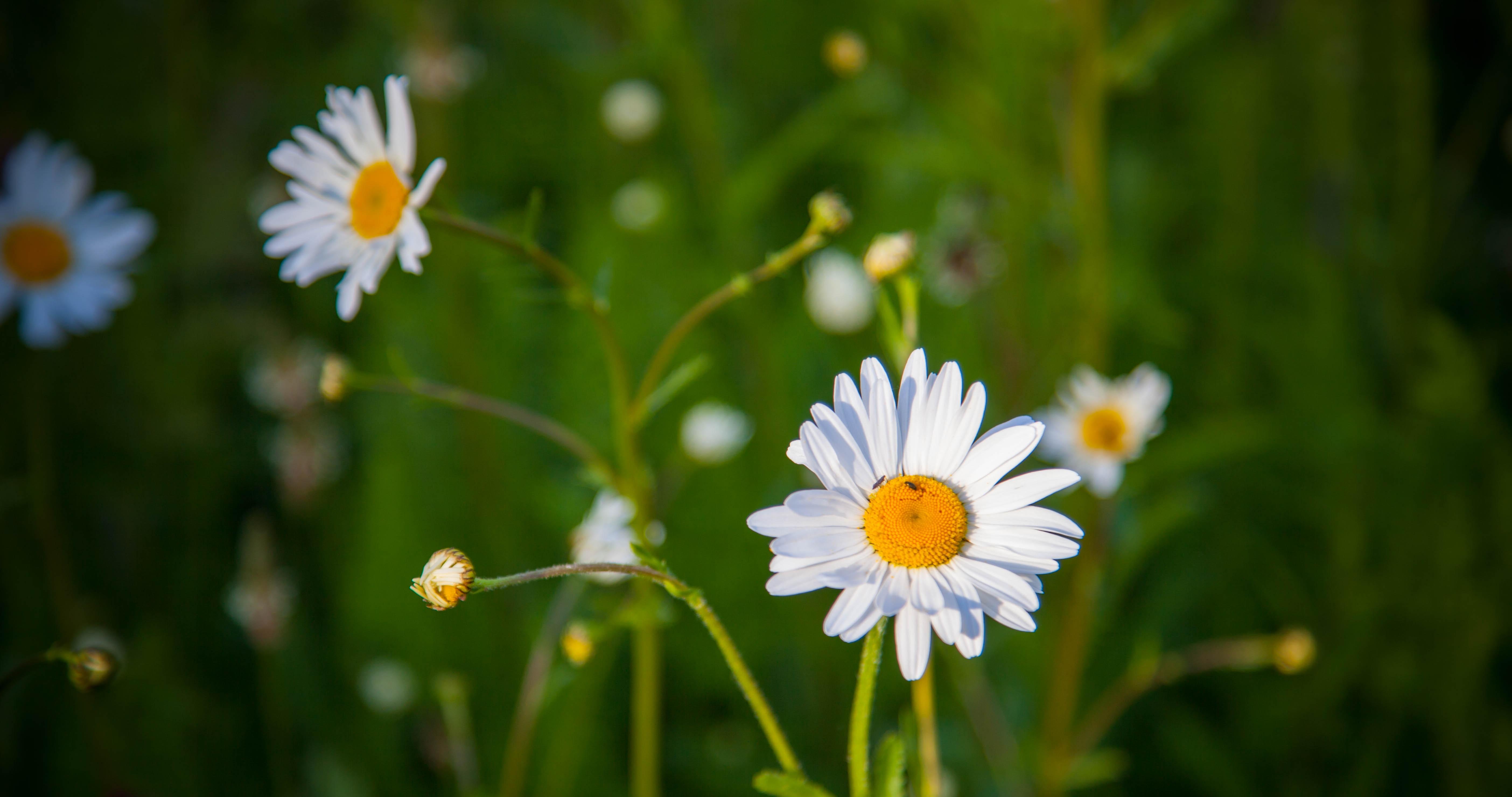 Fotos gratis : naturaleza, césped, blanco, campo, vendimia, prado ...