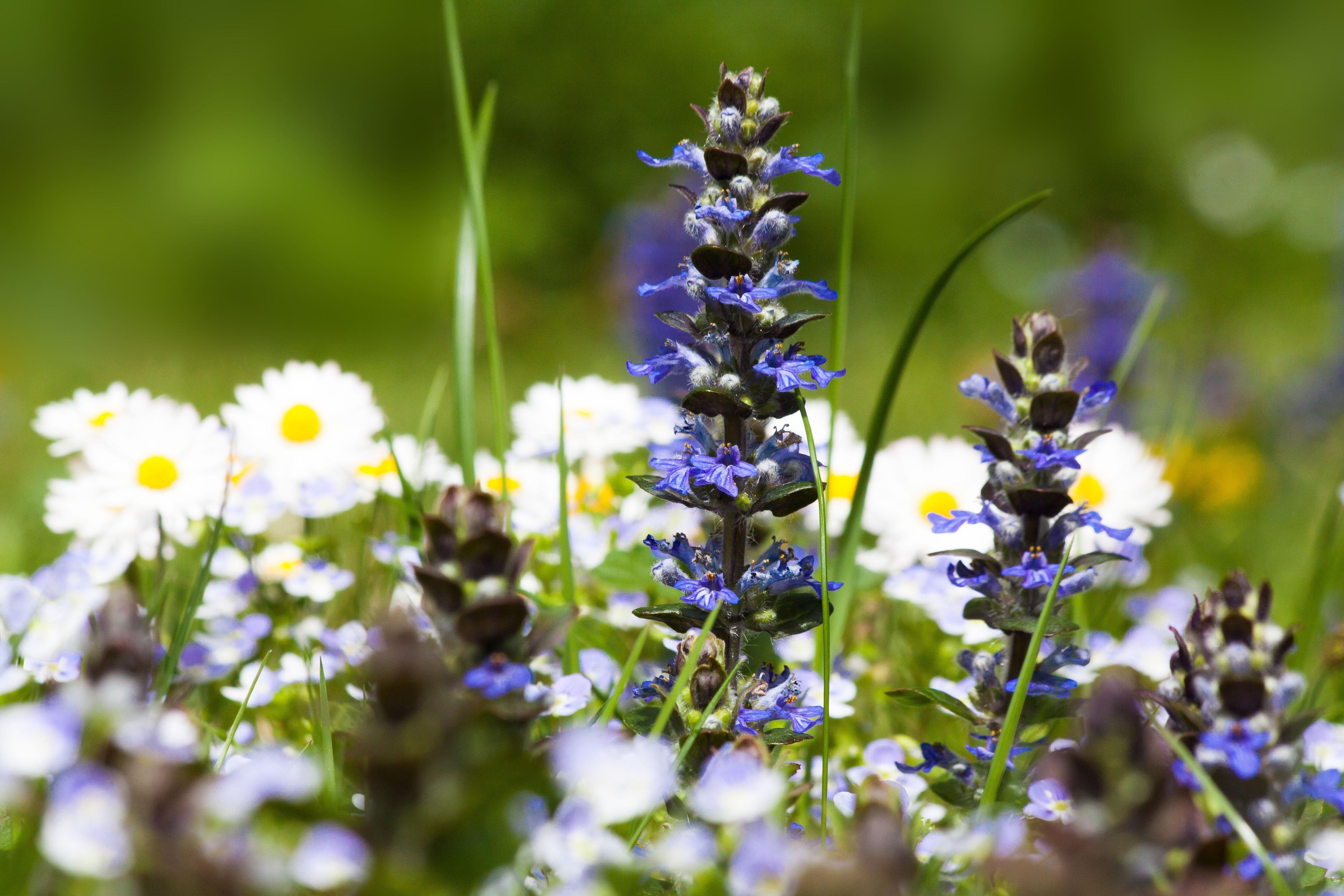 kostenlose foto natur gras bl hen wei wiese blume pollen fr hling gr n kraut. Black Bedroom Furniture Sets. Home Design Ideas
