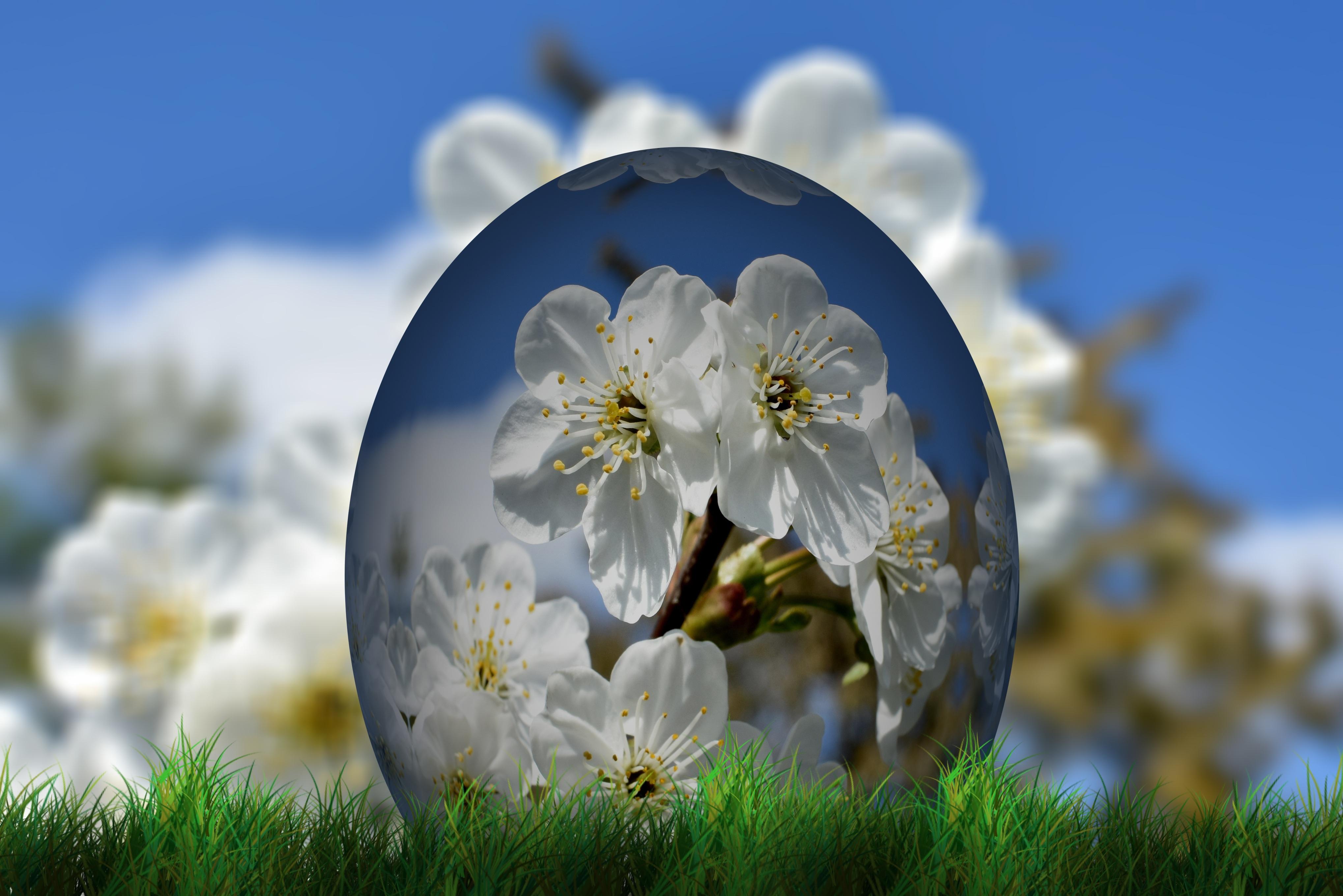 Hd Background Com: Gambar Wallpaper Bunga Sakura