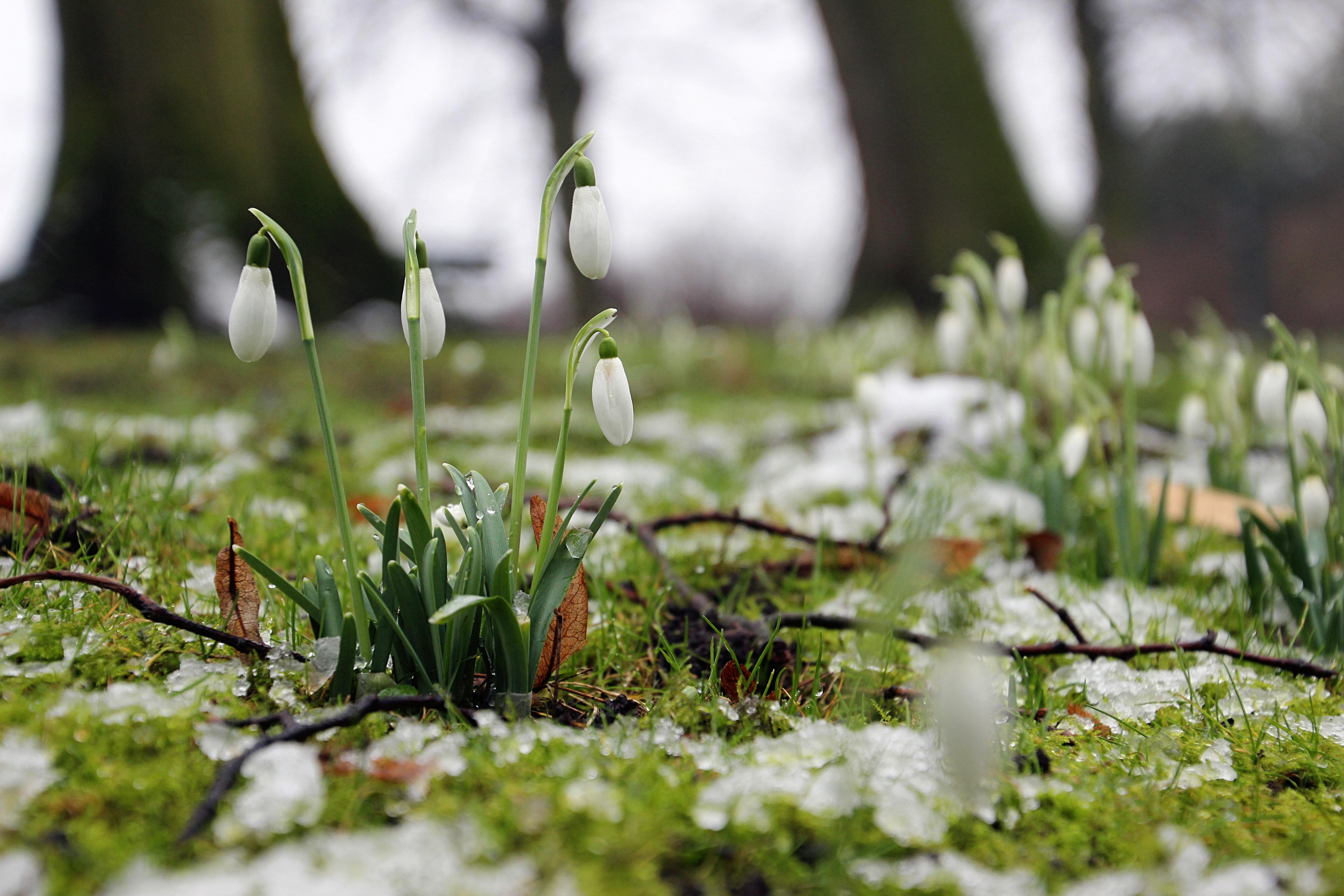 Красивые весенние фото март