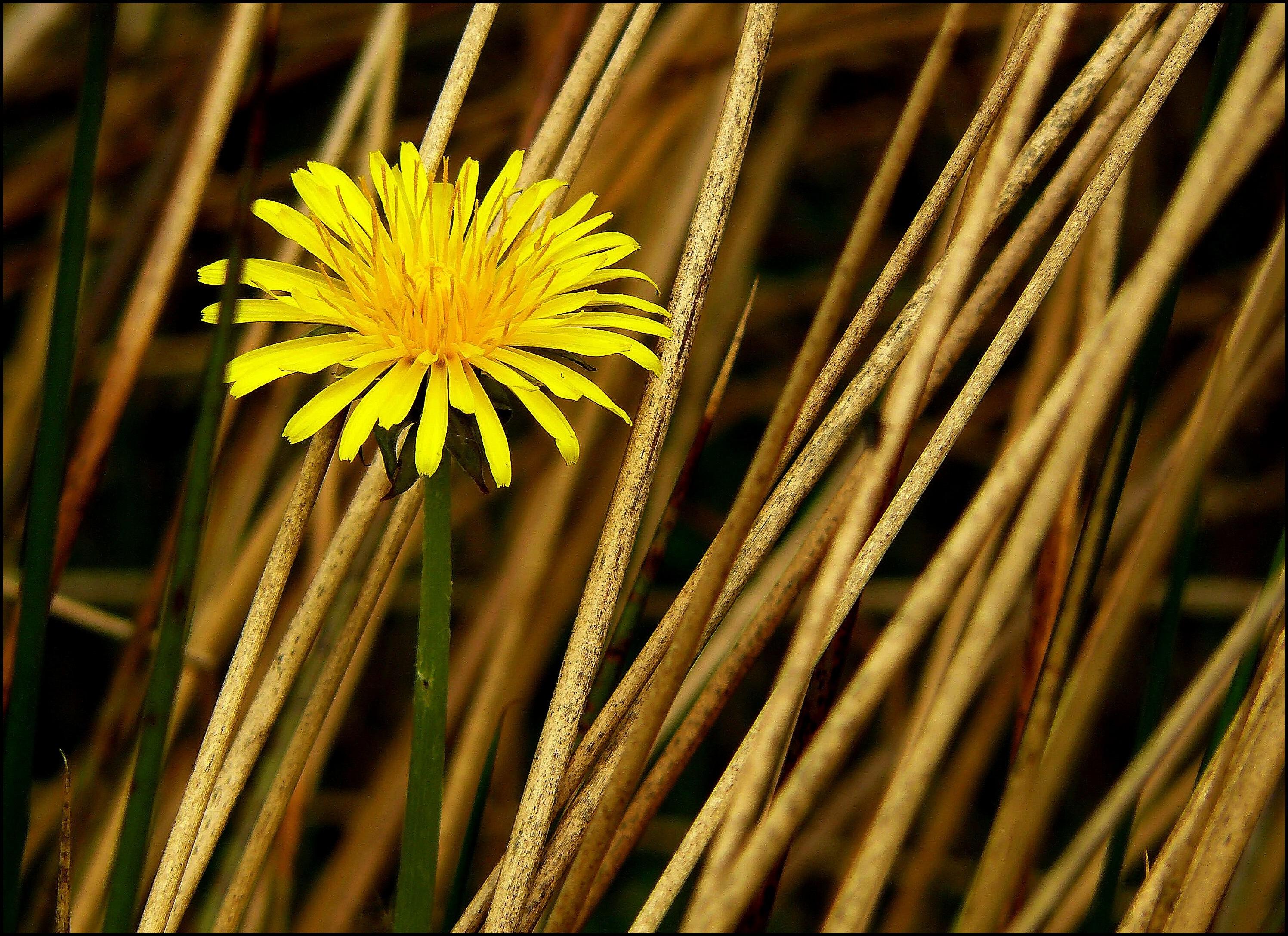 images gratuites la nature herbe branche fleur structure la photographie prairie. Black Bedroom Furniture Sets. Home Design Ideas