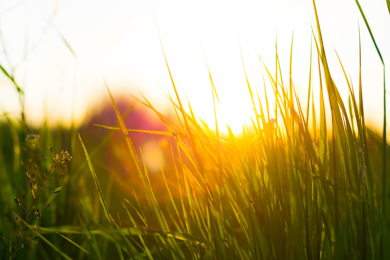 картинка утро трава природа сип-панелей