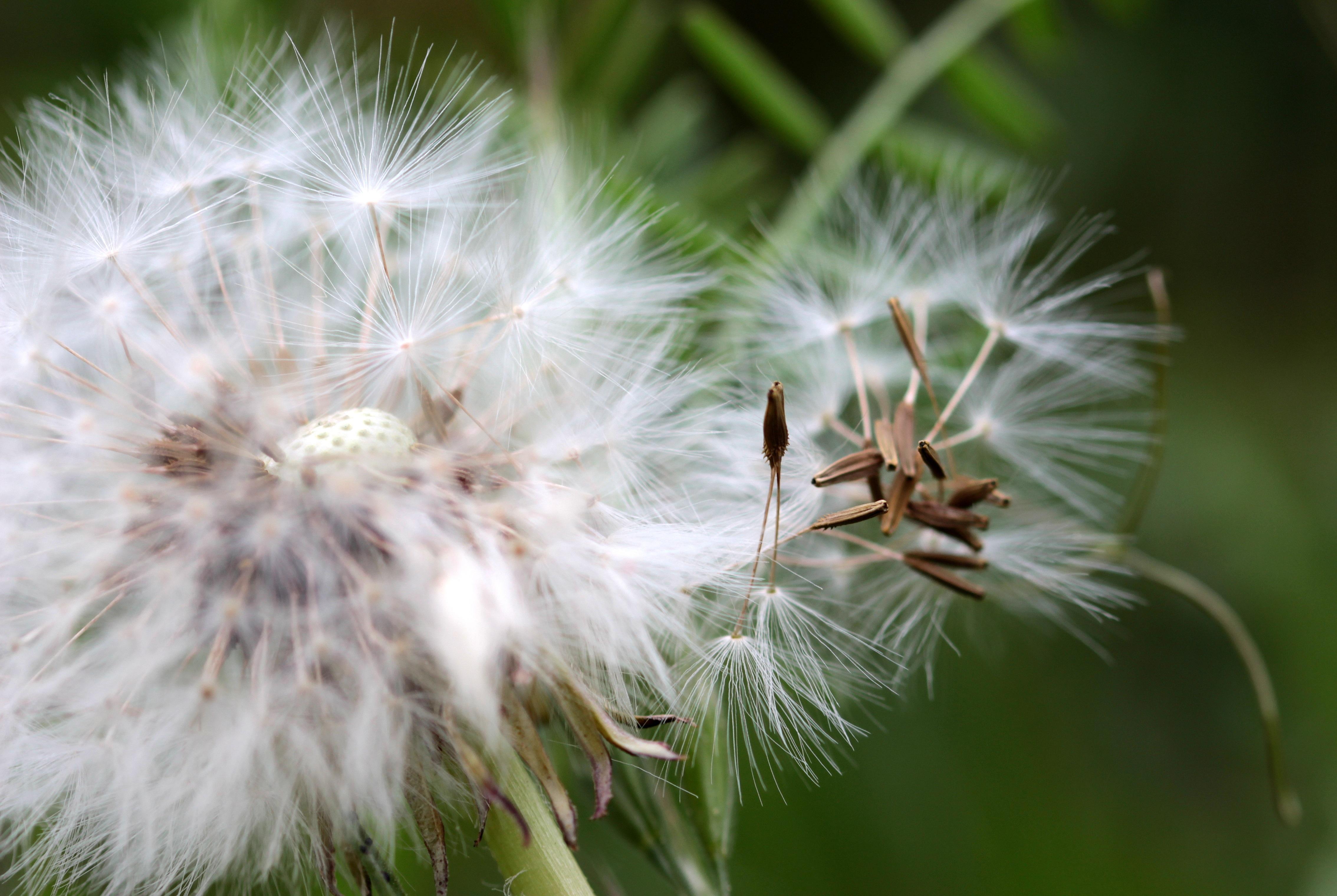 Каталог семян цветов с фото седек тут