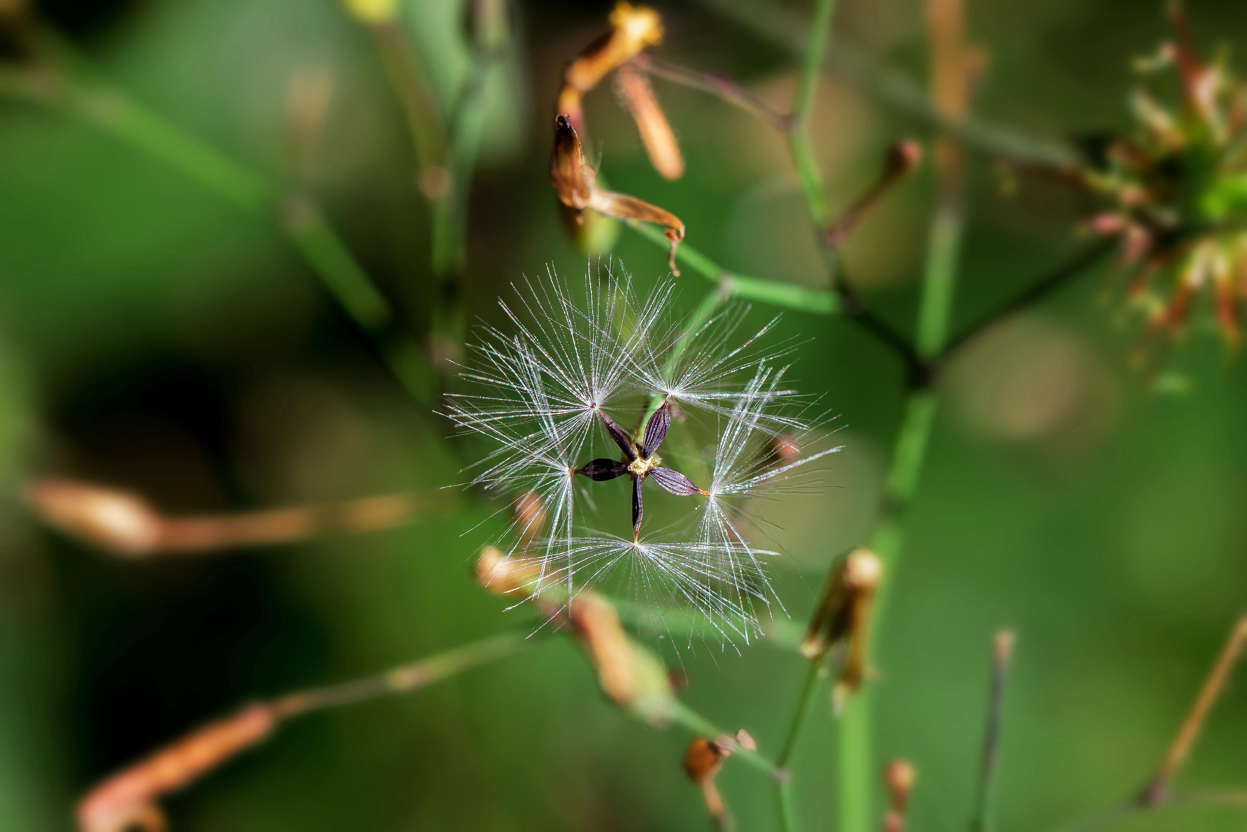 Unduh 95 Koleksi Gambar Flora Fauna Geometri Paling Bagus Gratis