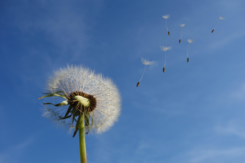 Картинки одуванчиков сквозь небо