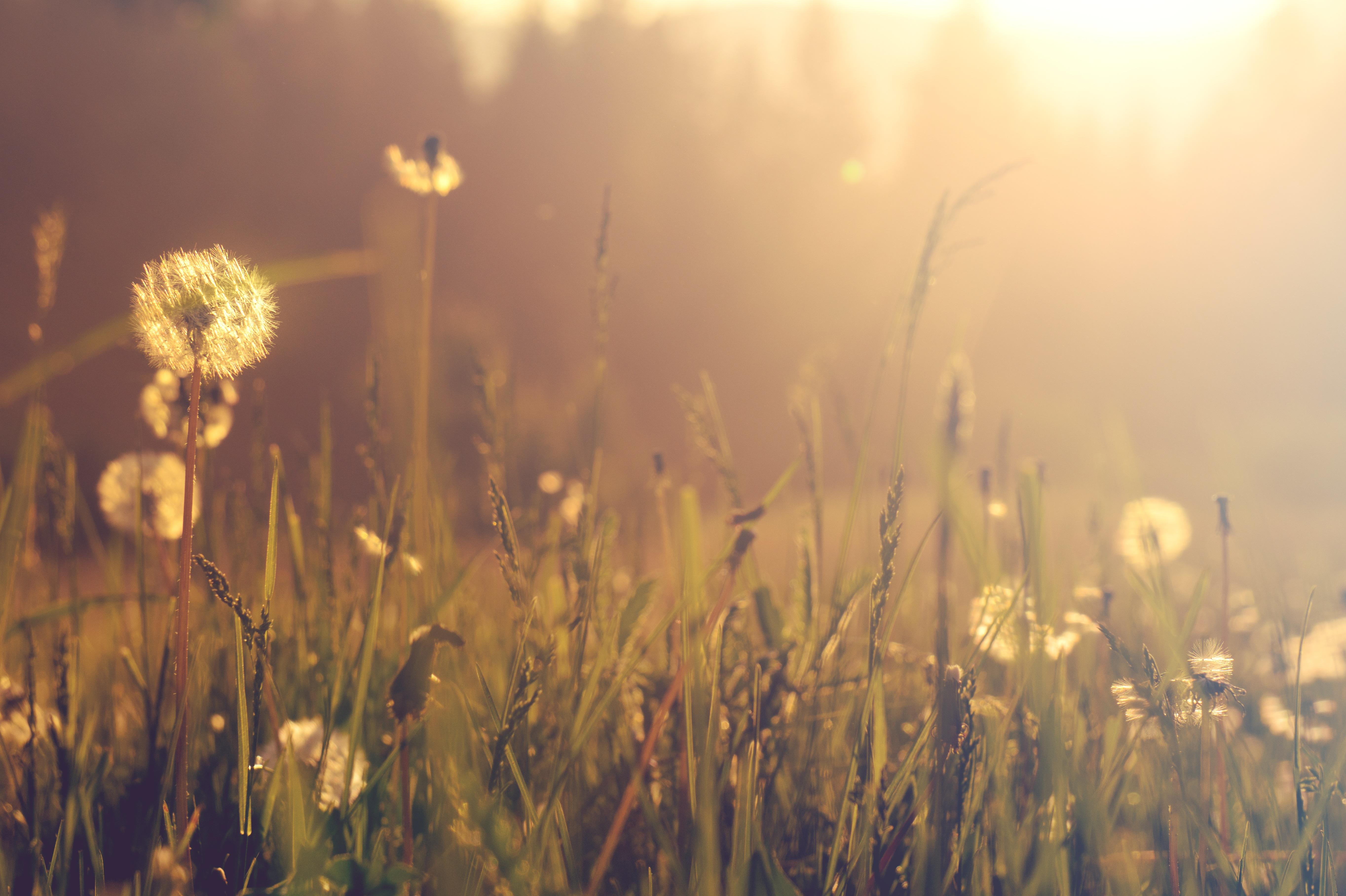 выдерживают стрижку, картинка утро трава природа глупости
