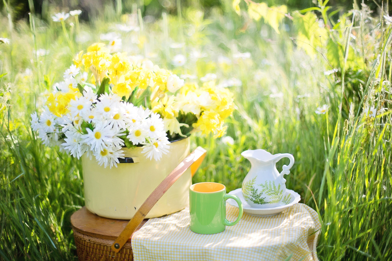 Про похмелье, открытки с летним добрым утром с природой