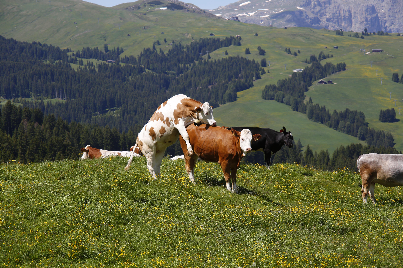 картинки коровы и лошади на лугу архангелу