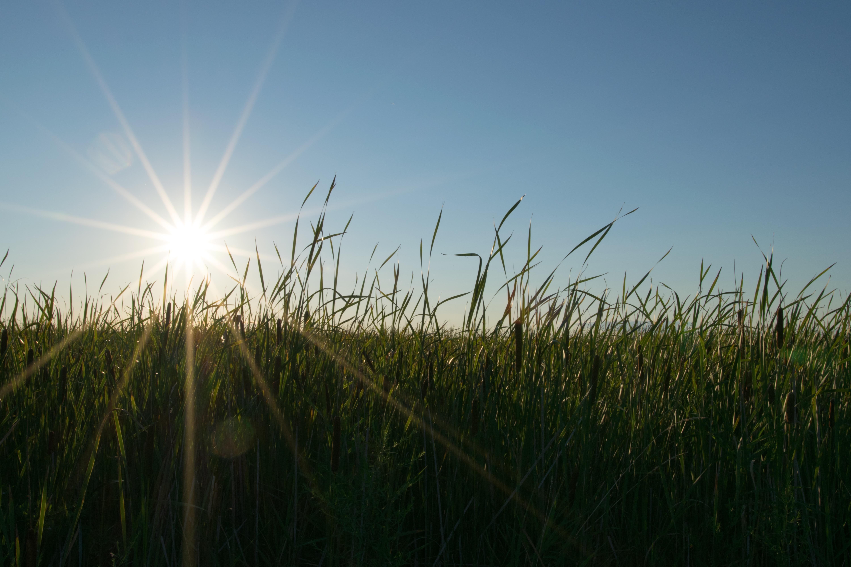 солнце и поле фото украине идет эсминец