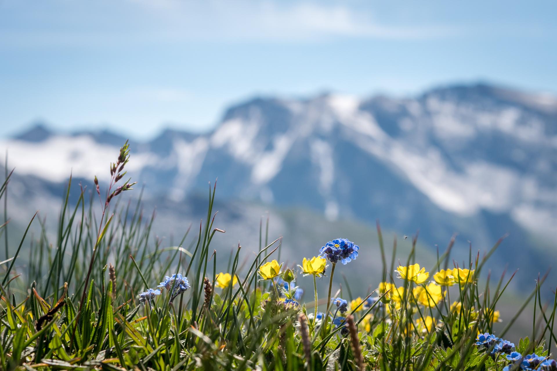 fotos gratis naturaleza c sped horizonte monta a
