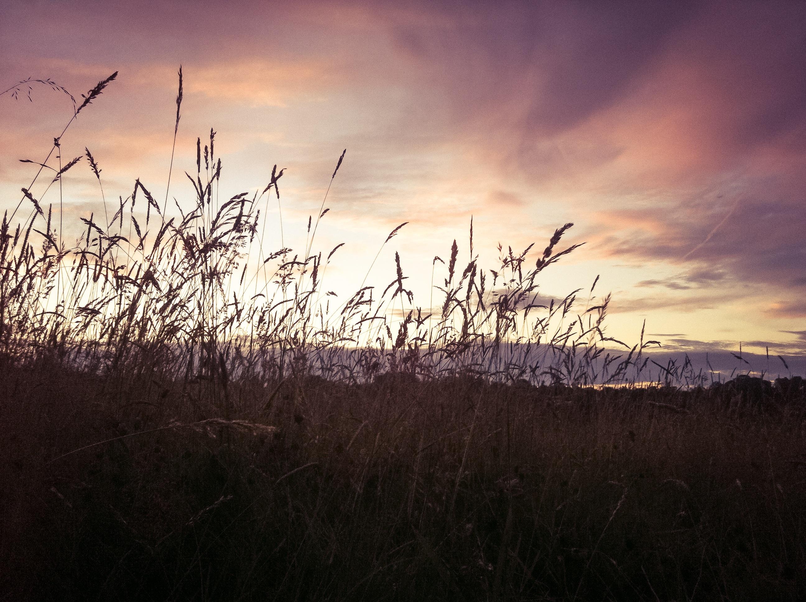 соли-лизунцы, картинки закат и трава этому