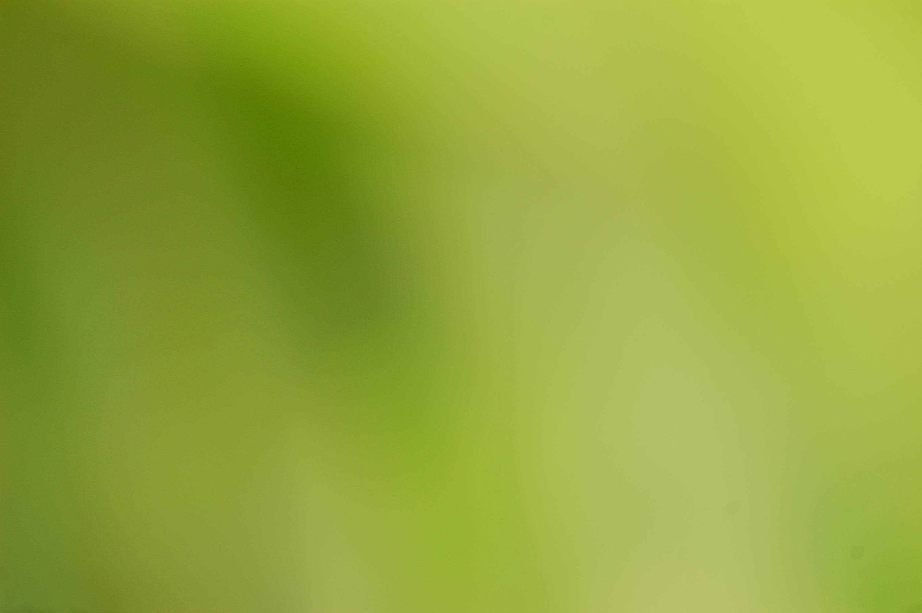 Free Images : nature, light, blur, plant, sunlight, leaf, line ...