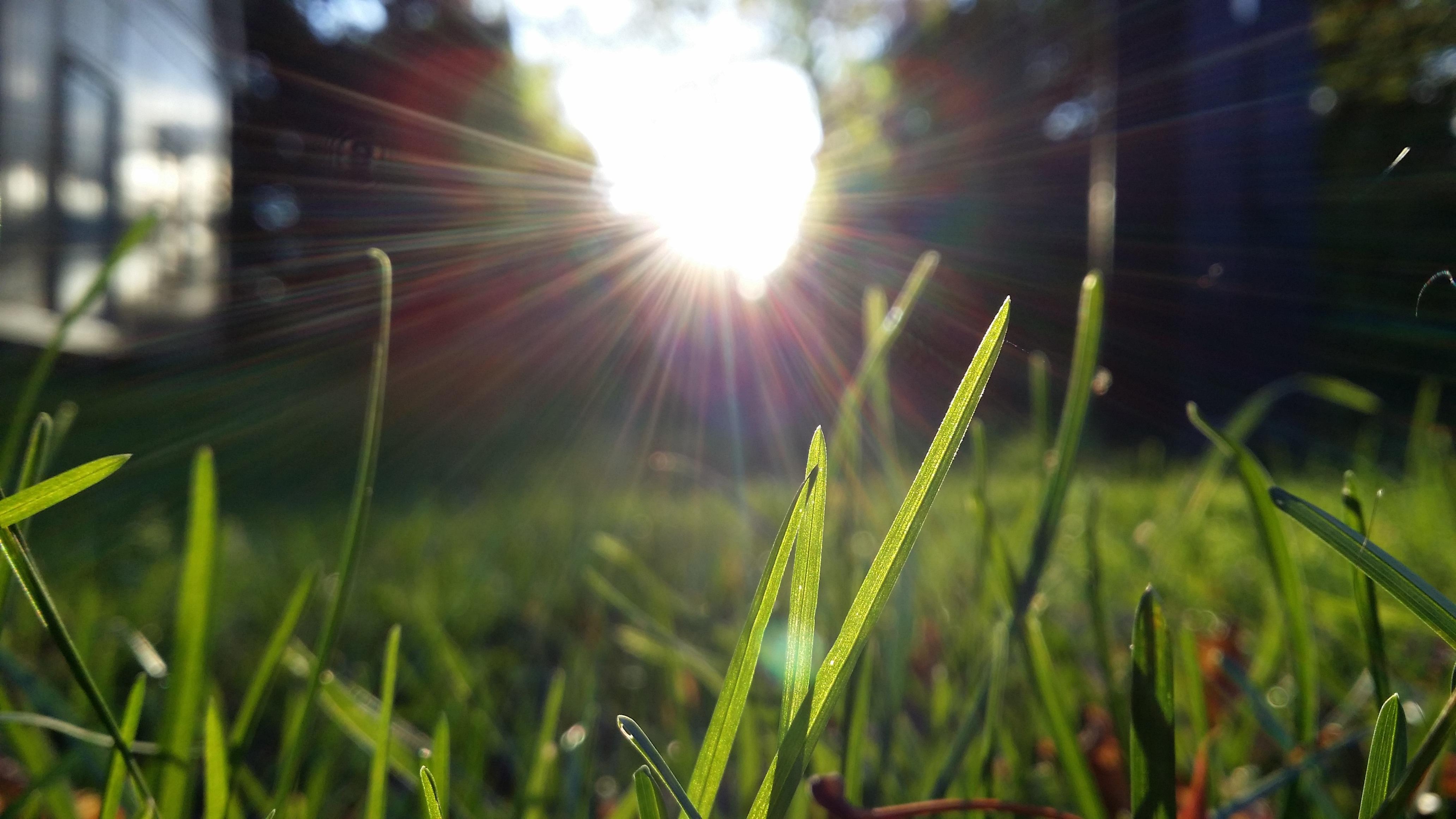 работают лучи солнца на траве картинки камера умной