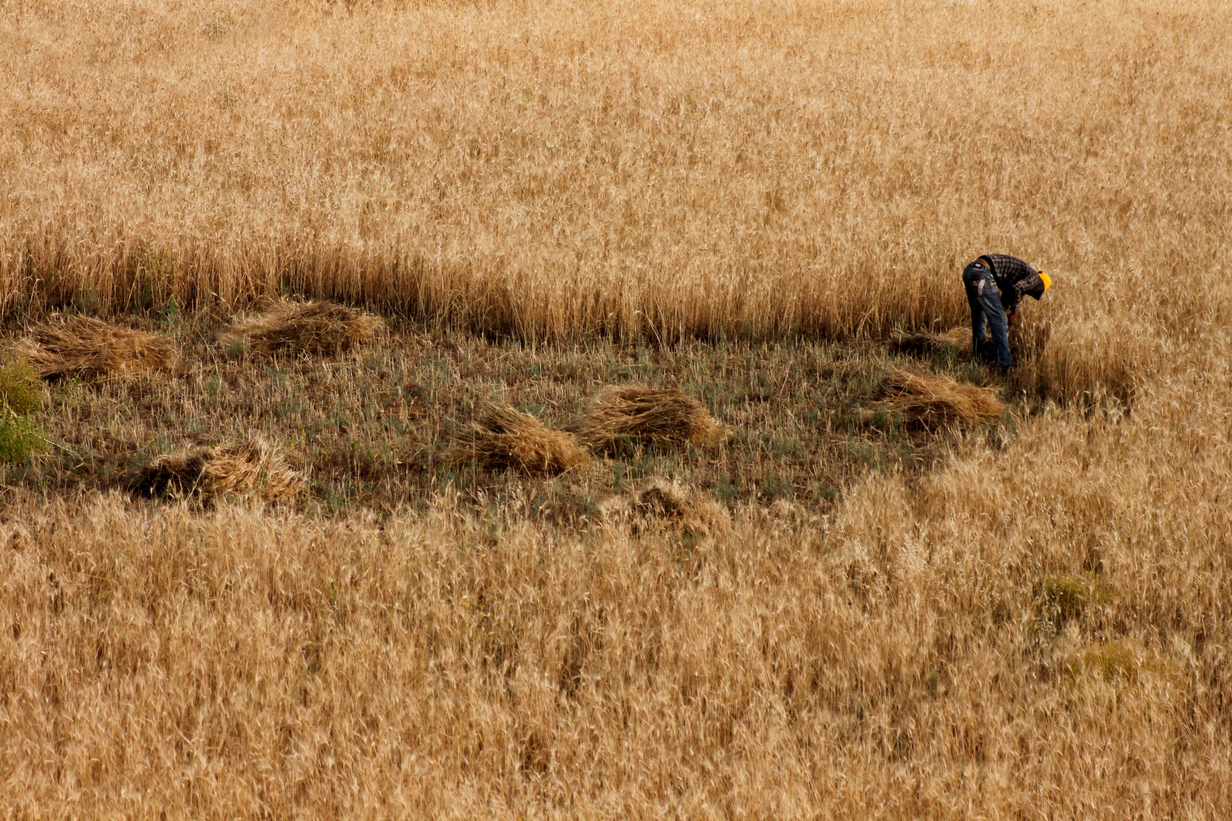 Fotos gratis naturaleza c sped pantano p jaro campo - Cortar hierba alta ...