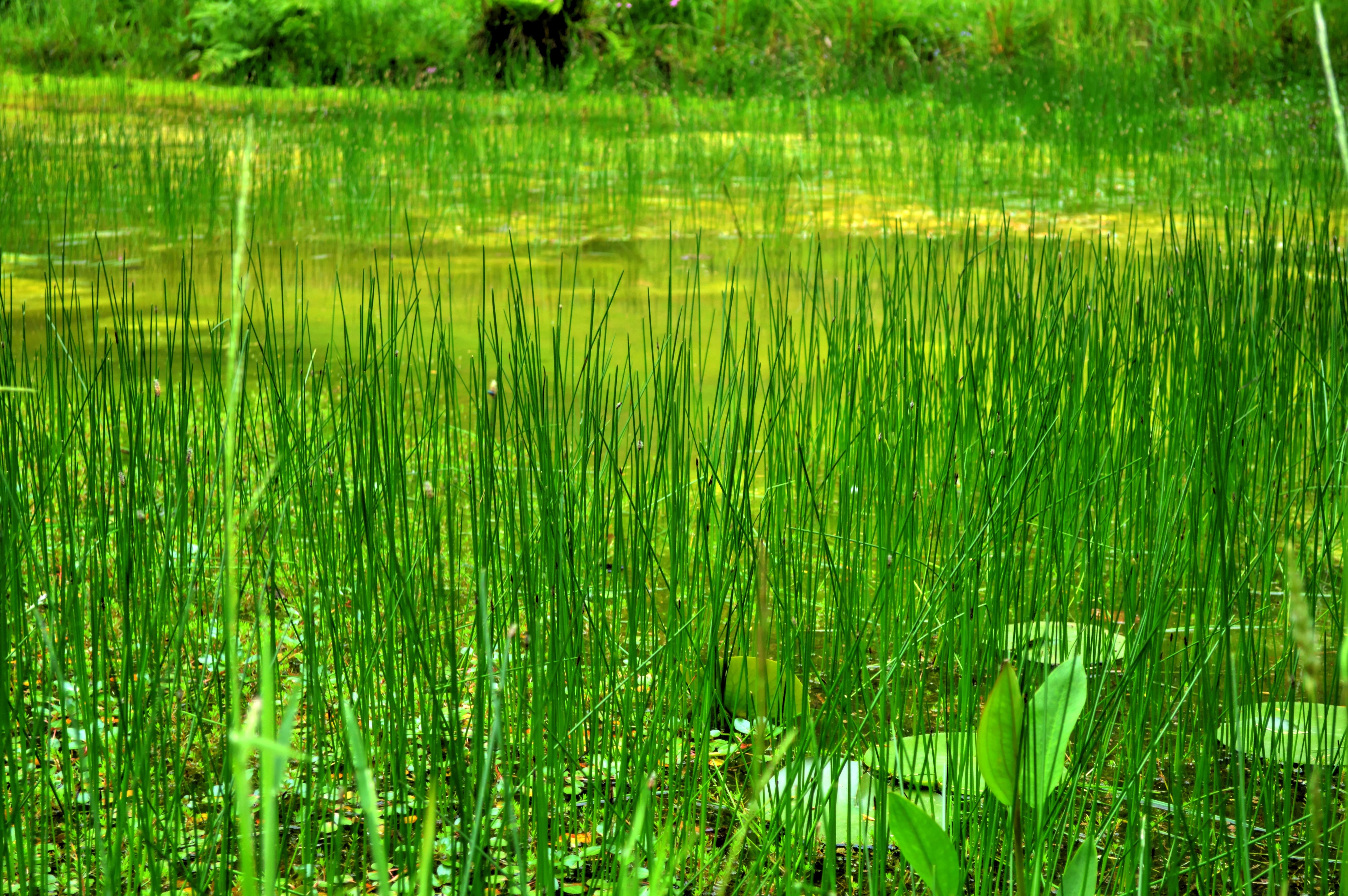 Картинка болотные растения
