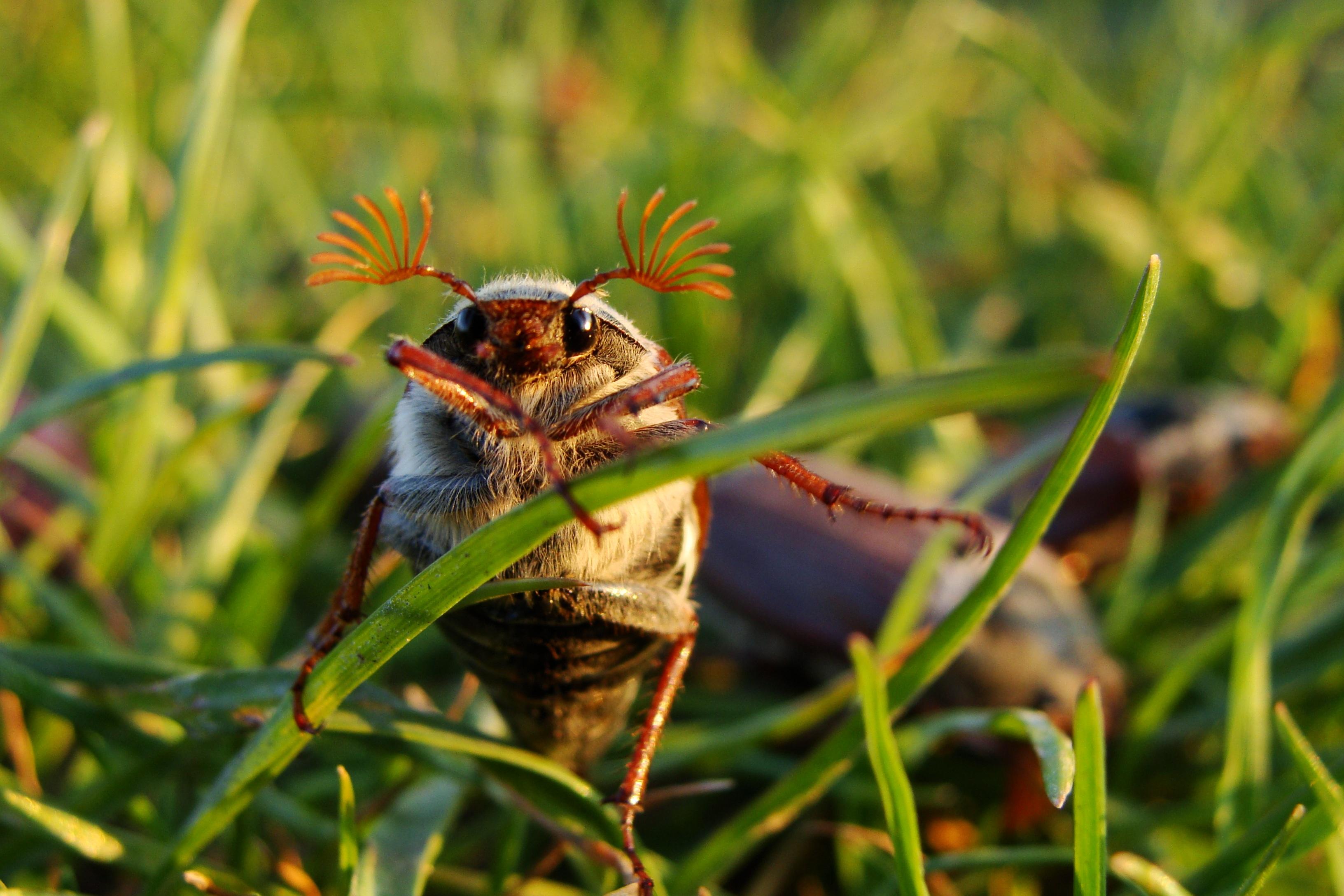 парках картинка милого жука нагара дне