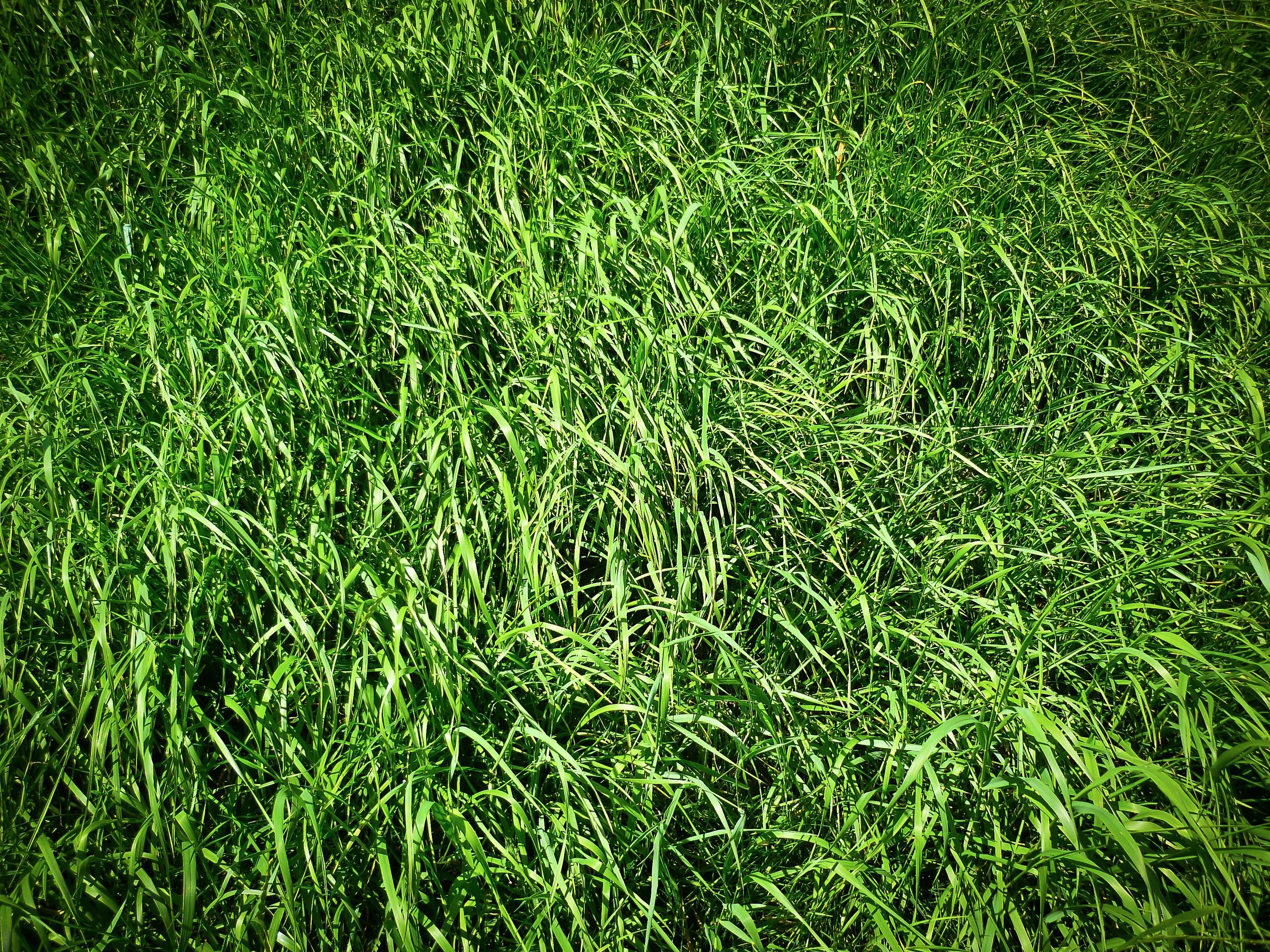 обработка фото когда трава изумрудного цвета под люстры потолок
