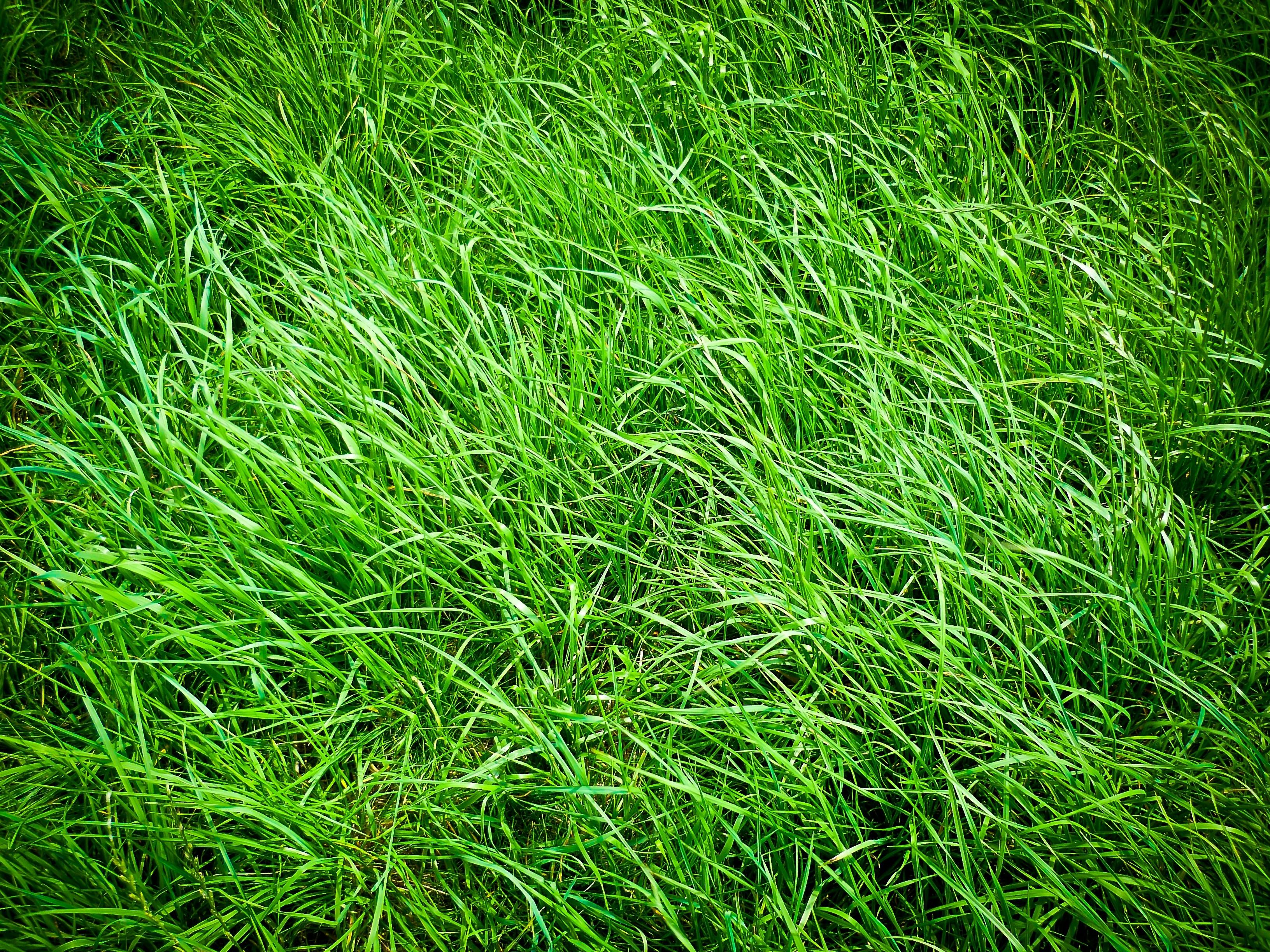Большие картинки травы