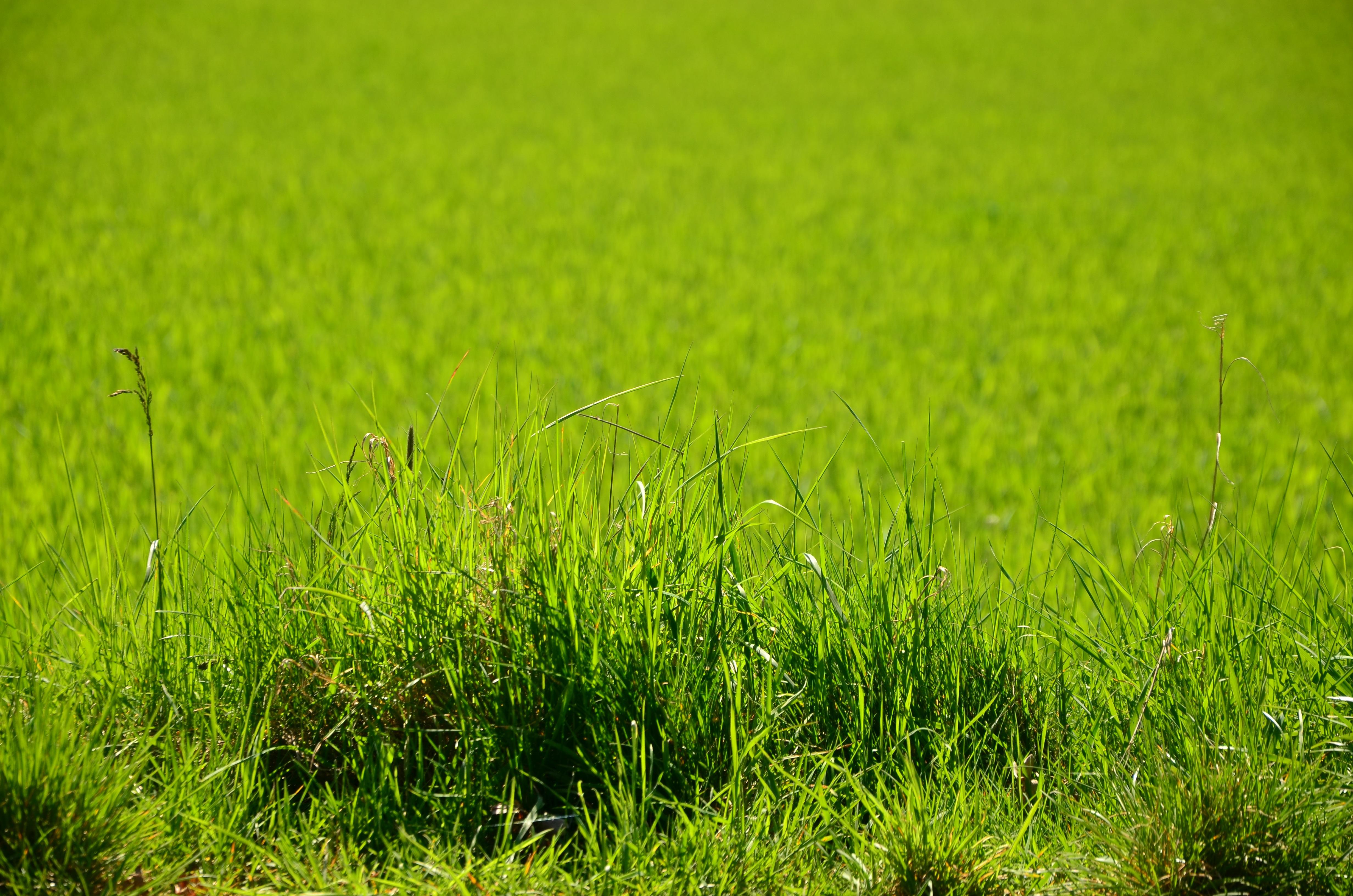 Картинки трава луга