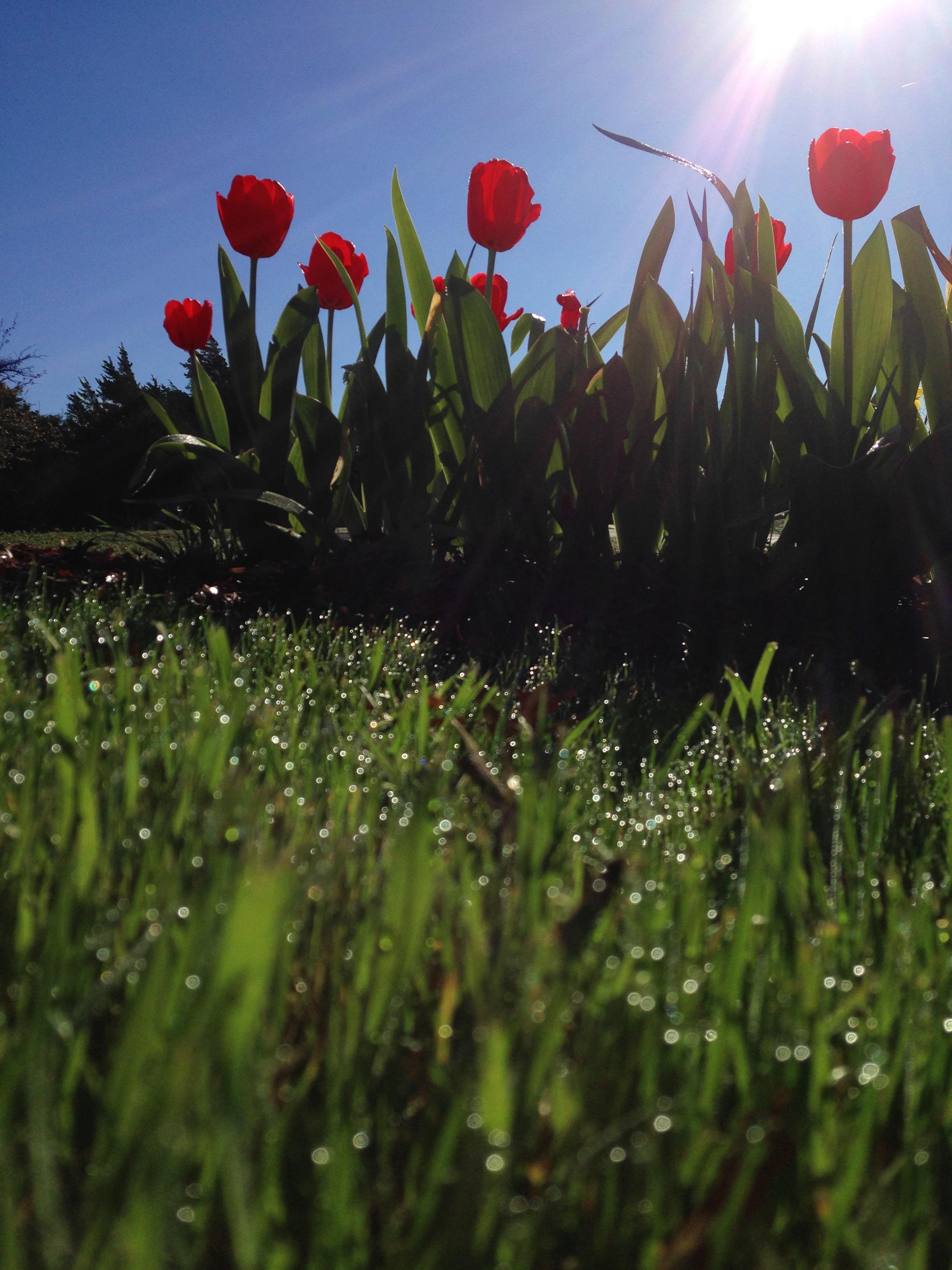 Free nature field lawn meadow sunlight leaf flower