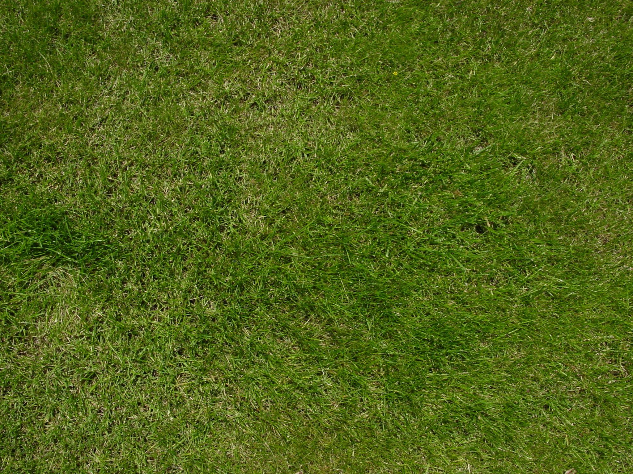 Fotos gratis naturaleza planta campo prado textura - Suelo hierba artificial ...