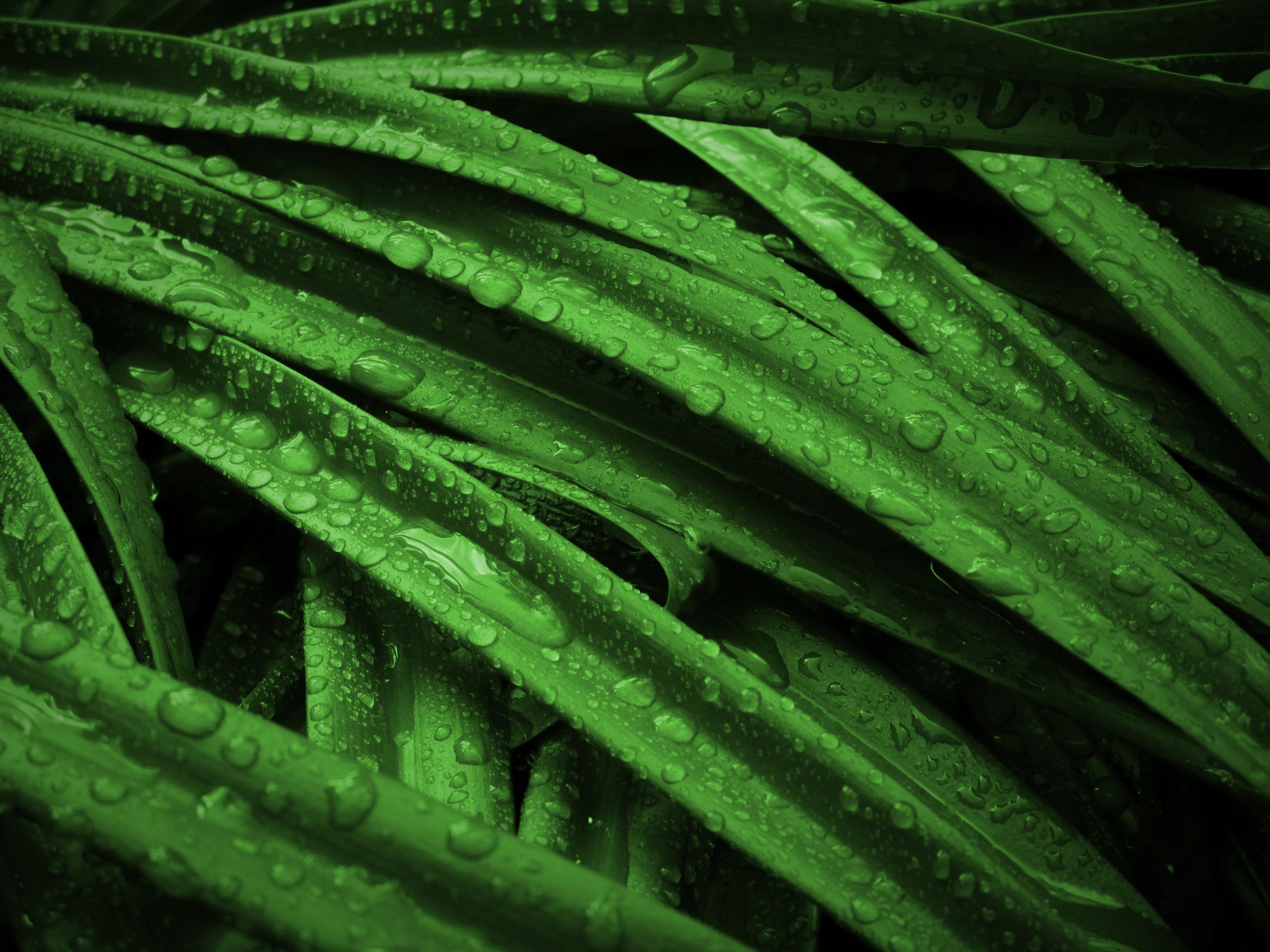 Free nature field leaf flower green soil botany