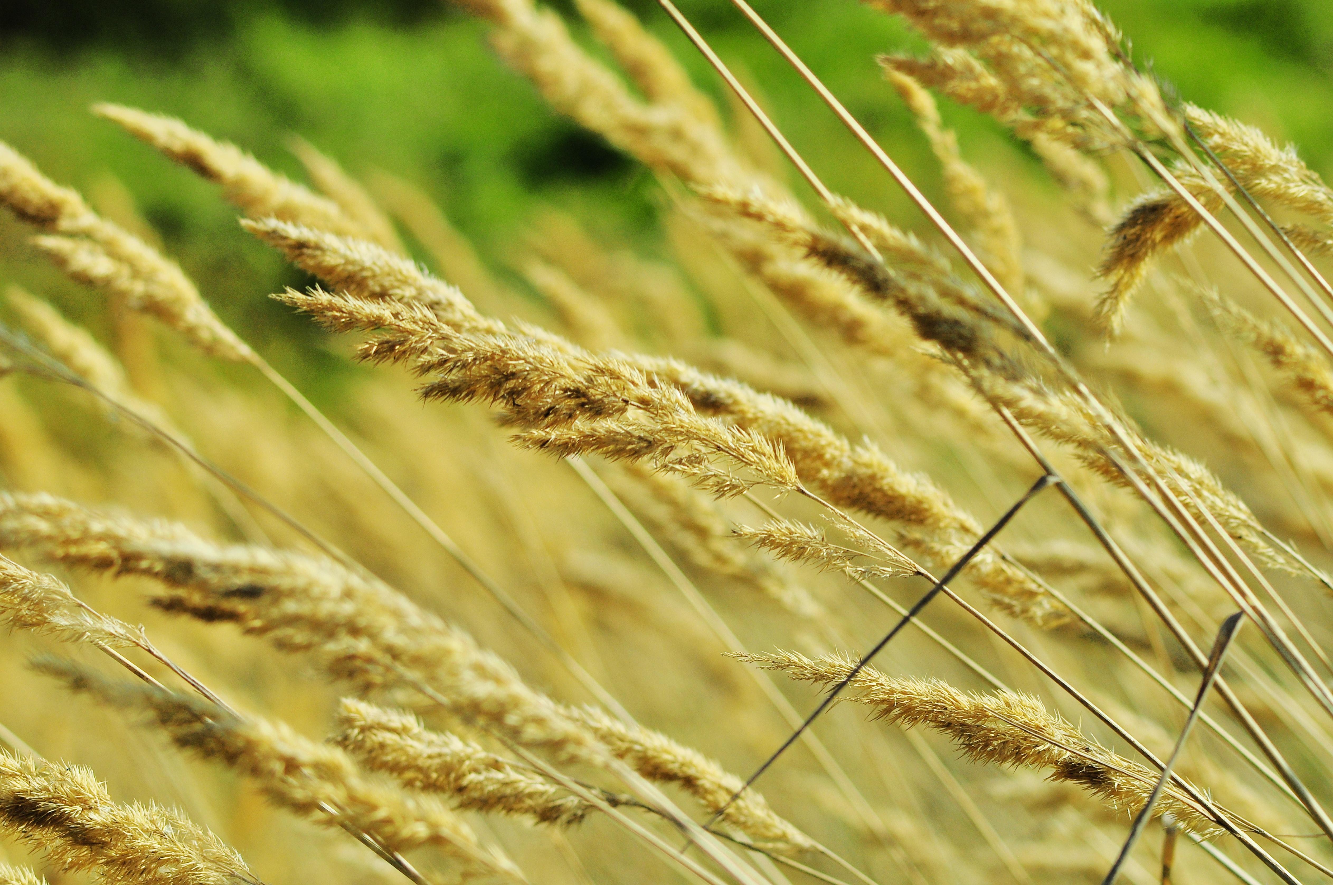 Banco de imagens natureza plantar campo prado cevada for En cuanto tiempo se cosecha la tilapia
