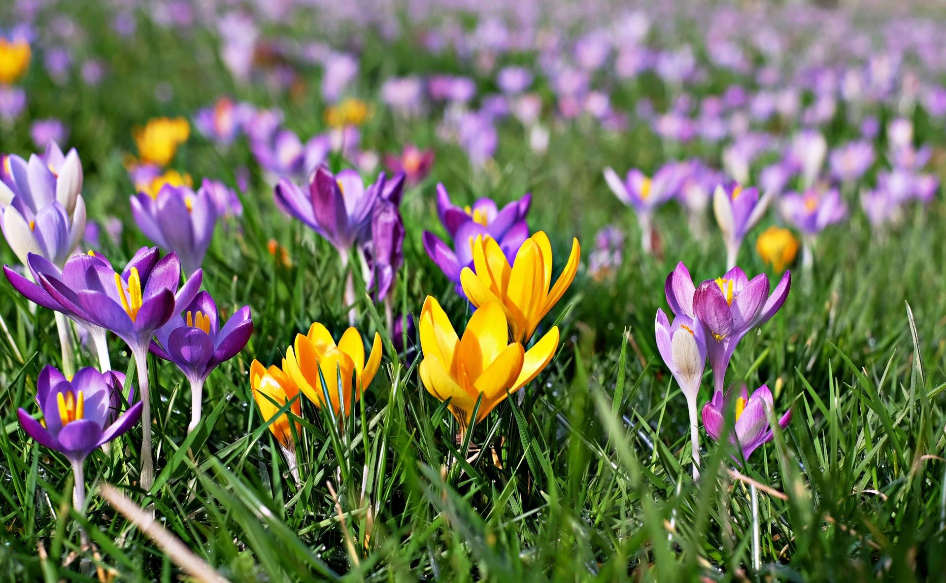 фото цветы весна в полях майдонини таржима ?илганда