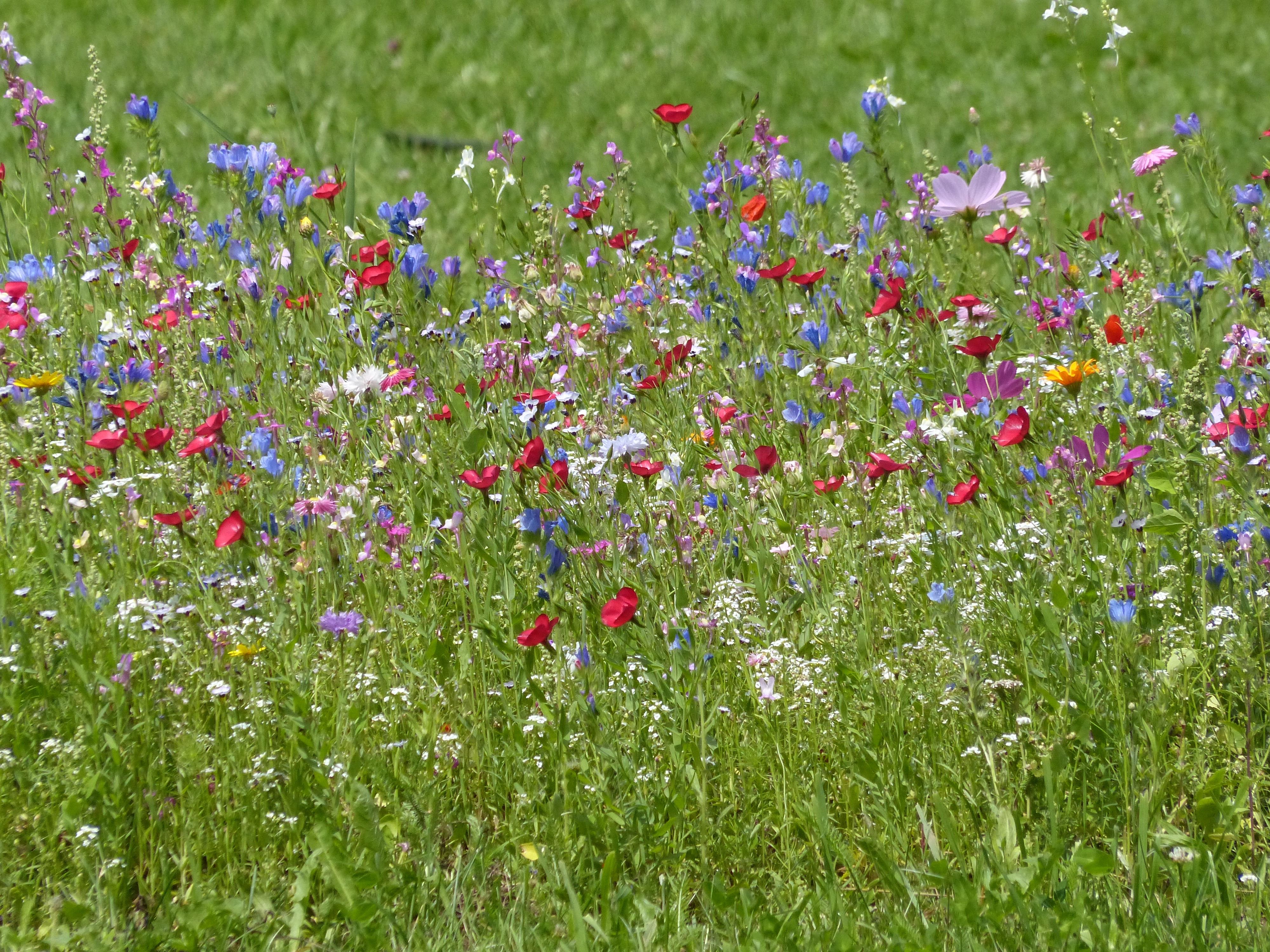 отдельном зале картинки много цветов на лугу личная жизнь обеих