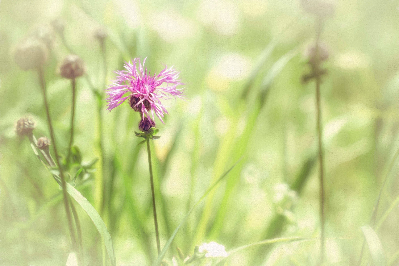 Gambar Alam Menanam Bidang Padang Rumput Musim Panas Hijau