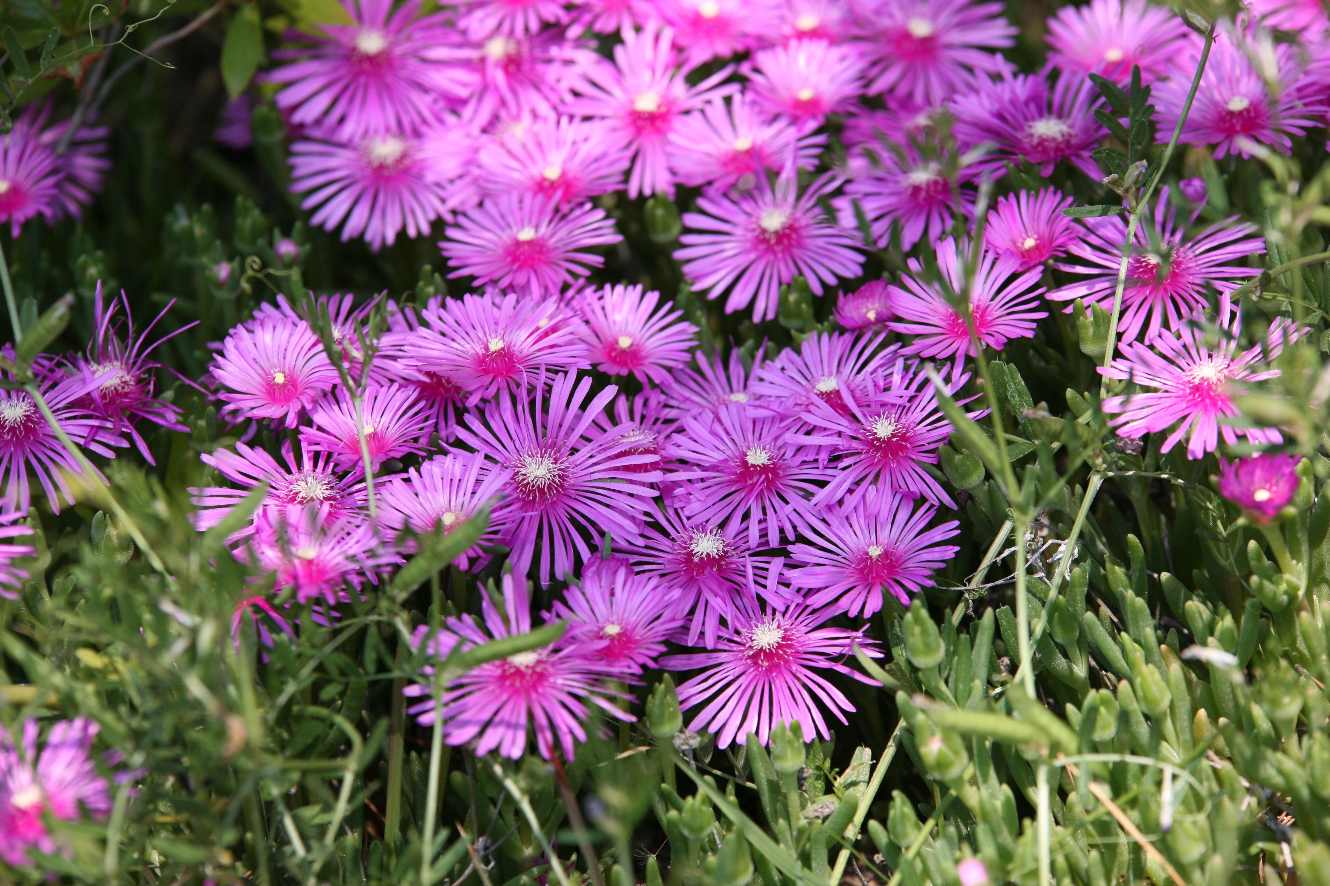 Gratuites la nature herbe fleur pétale printemps