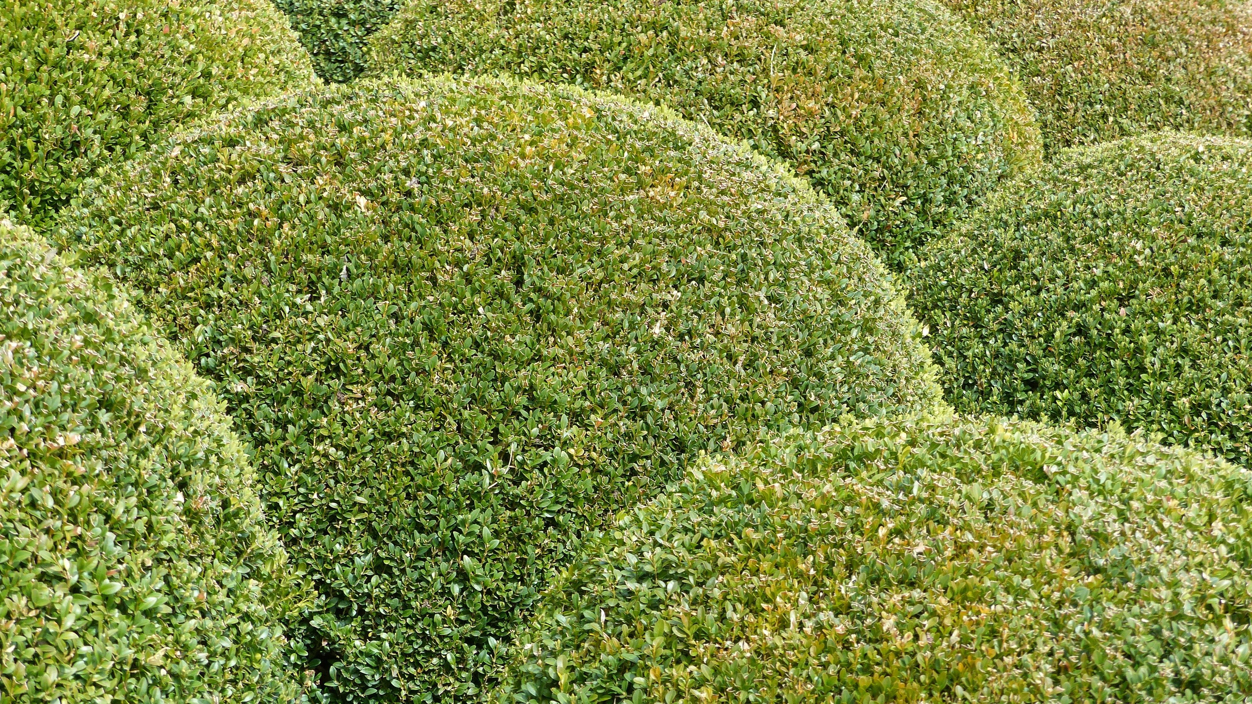 Kostenlose foto Natur Gras Rasen Blume Grün Kraut