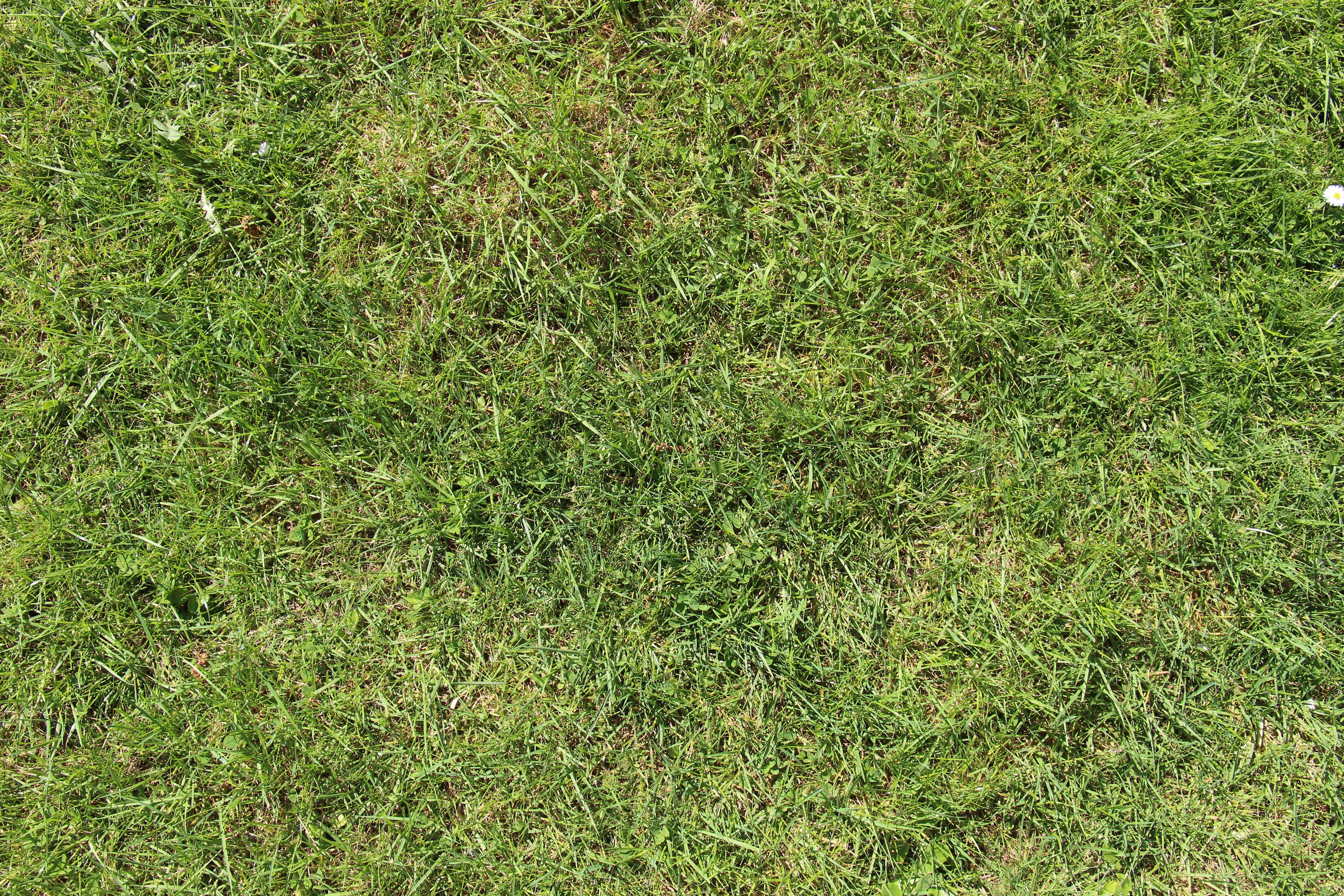 Fotos gratis naturaleza c sped prado hoja flor for Hierba jardin