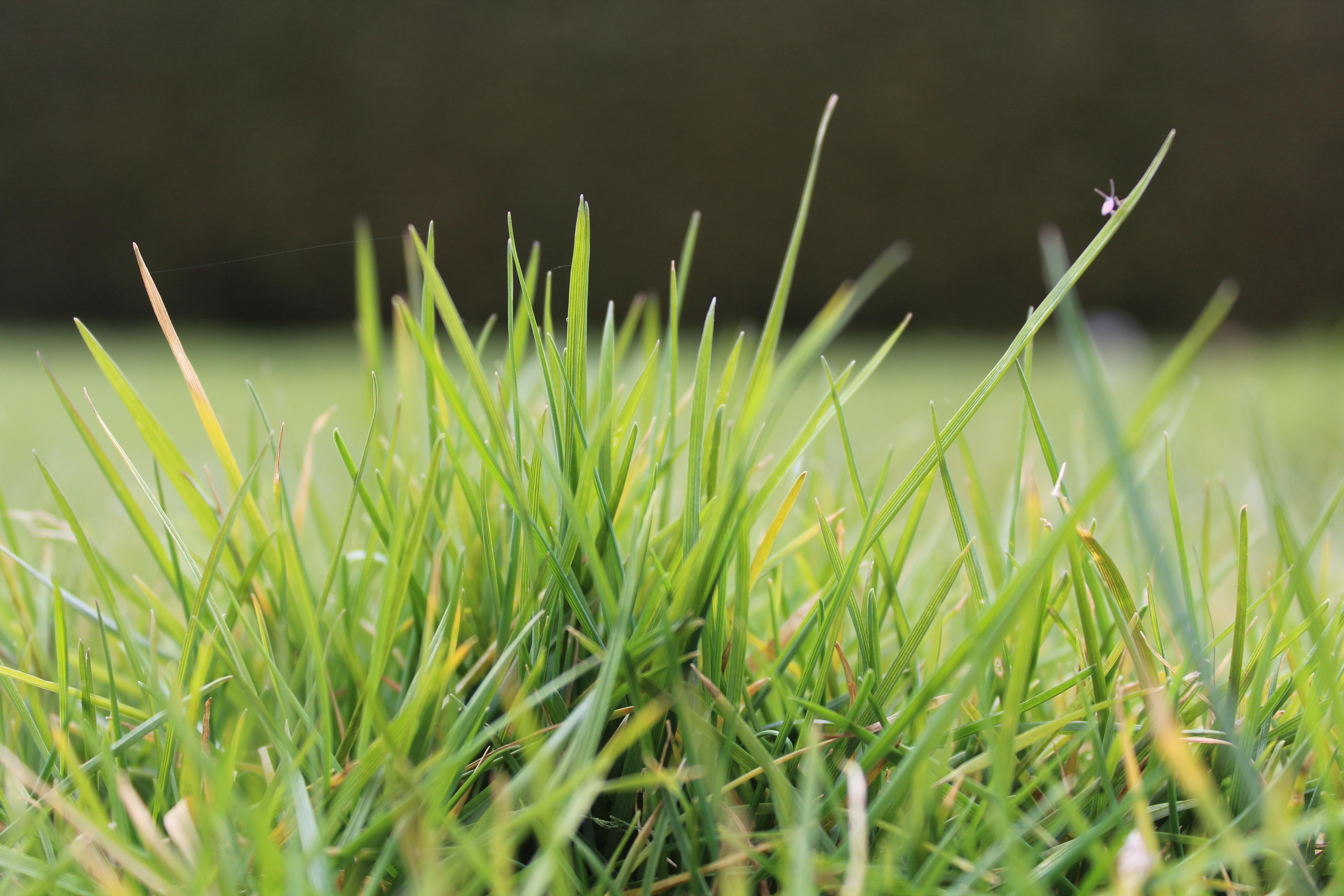 Free Images : nature, lawn, meadow, prairie, leaf, flower