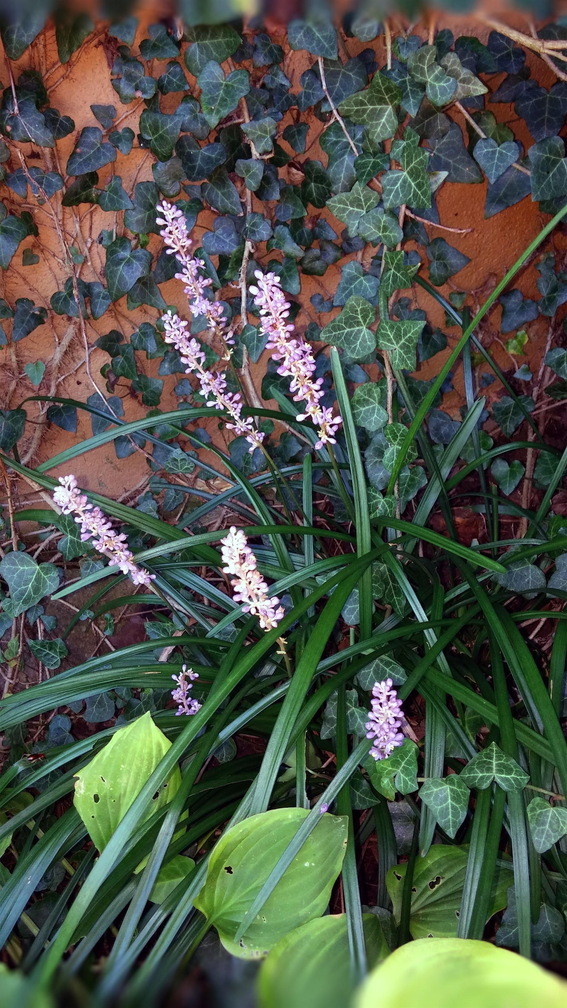Free Images : nature, leaf, environment, foliage, green, botany ...
