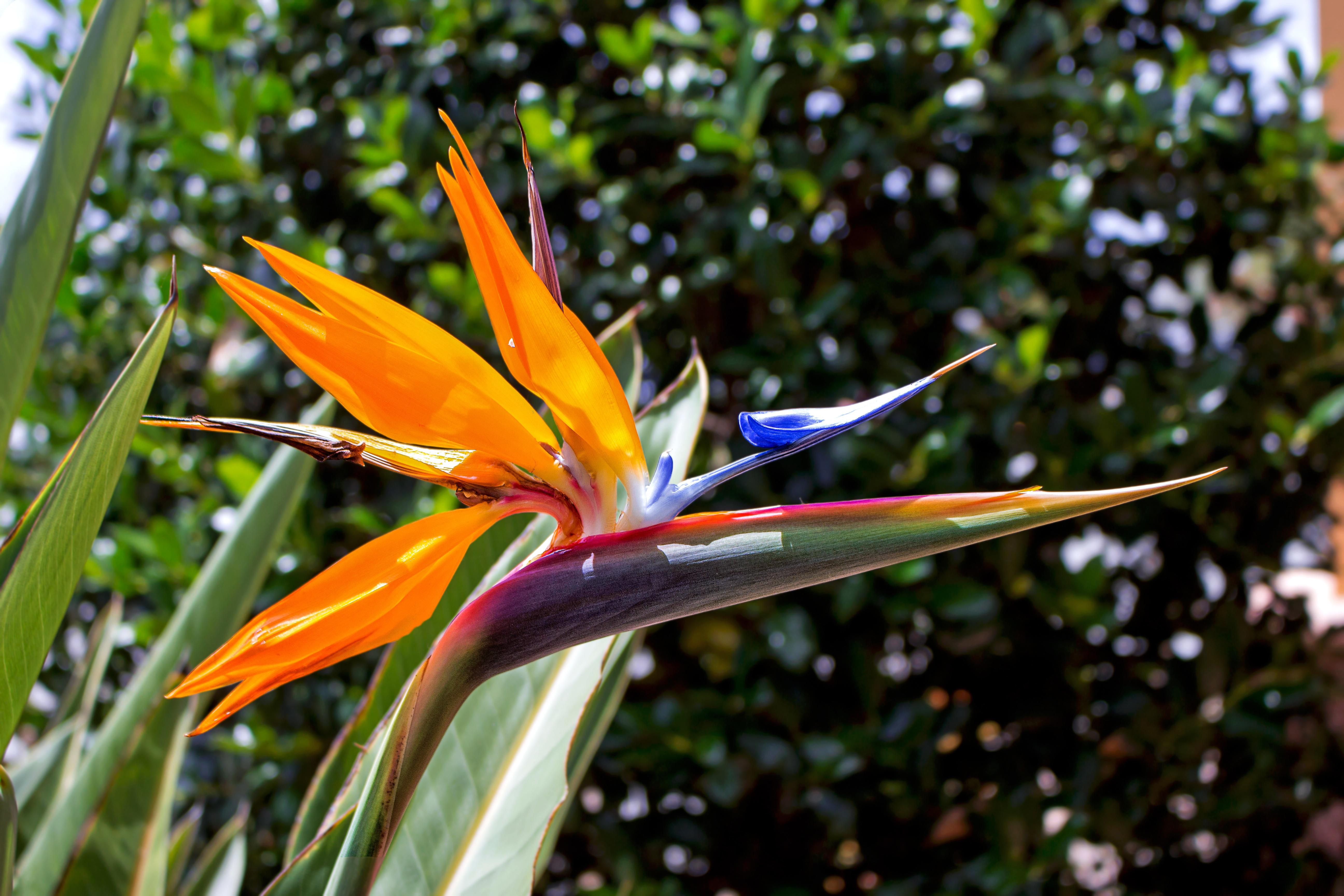 Images gratuites la nature herbe feuille vert l 39 automne botanique jaune jardin flore - Oiseau de paradis plante ...