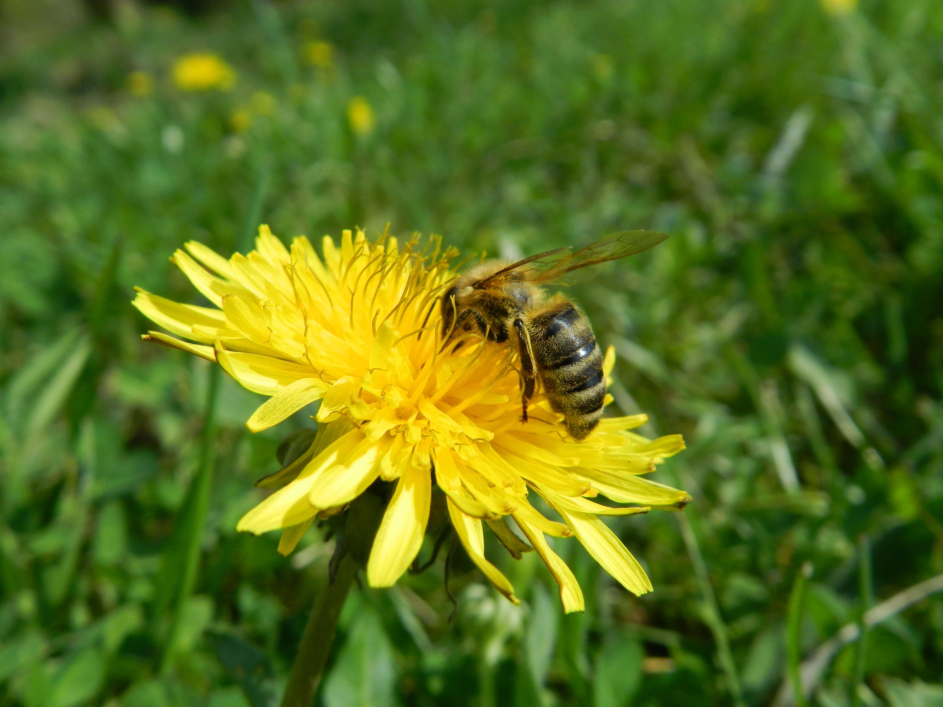 Фото природа пчелы