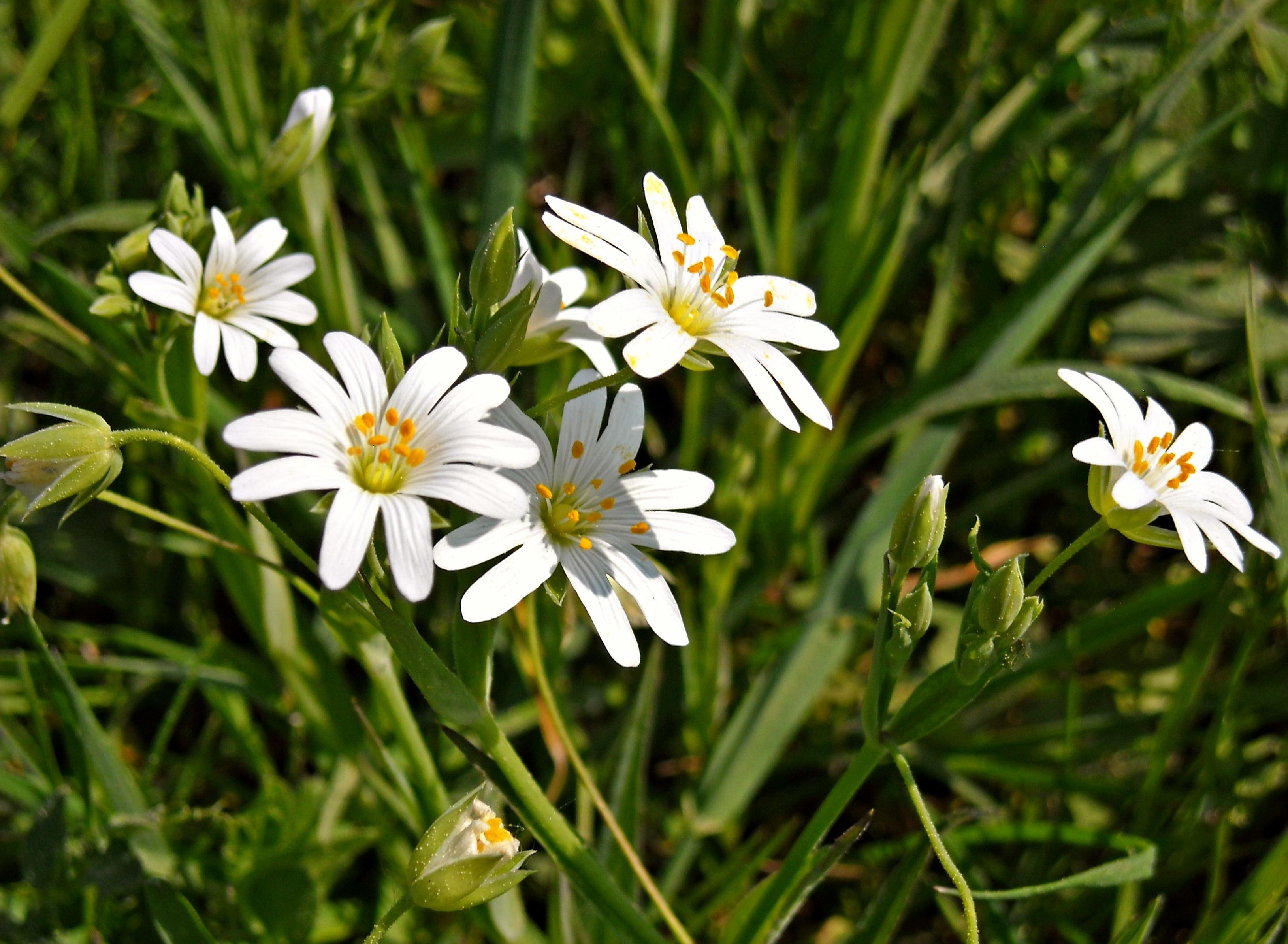 Fotos Gratis Naturaleza Cesped Prado Verde Botanica Flora