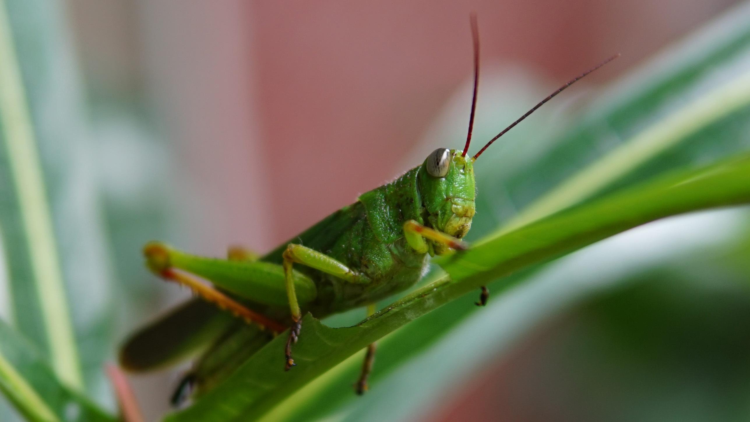 Free Images : nature, grass, leaf, flower, animal, summer ...