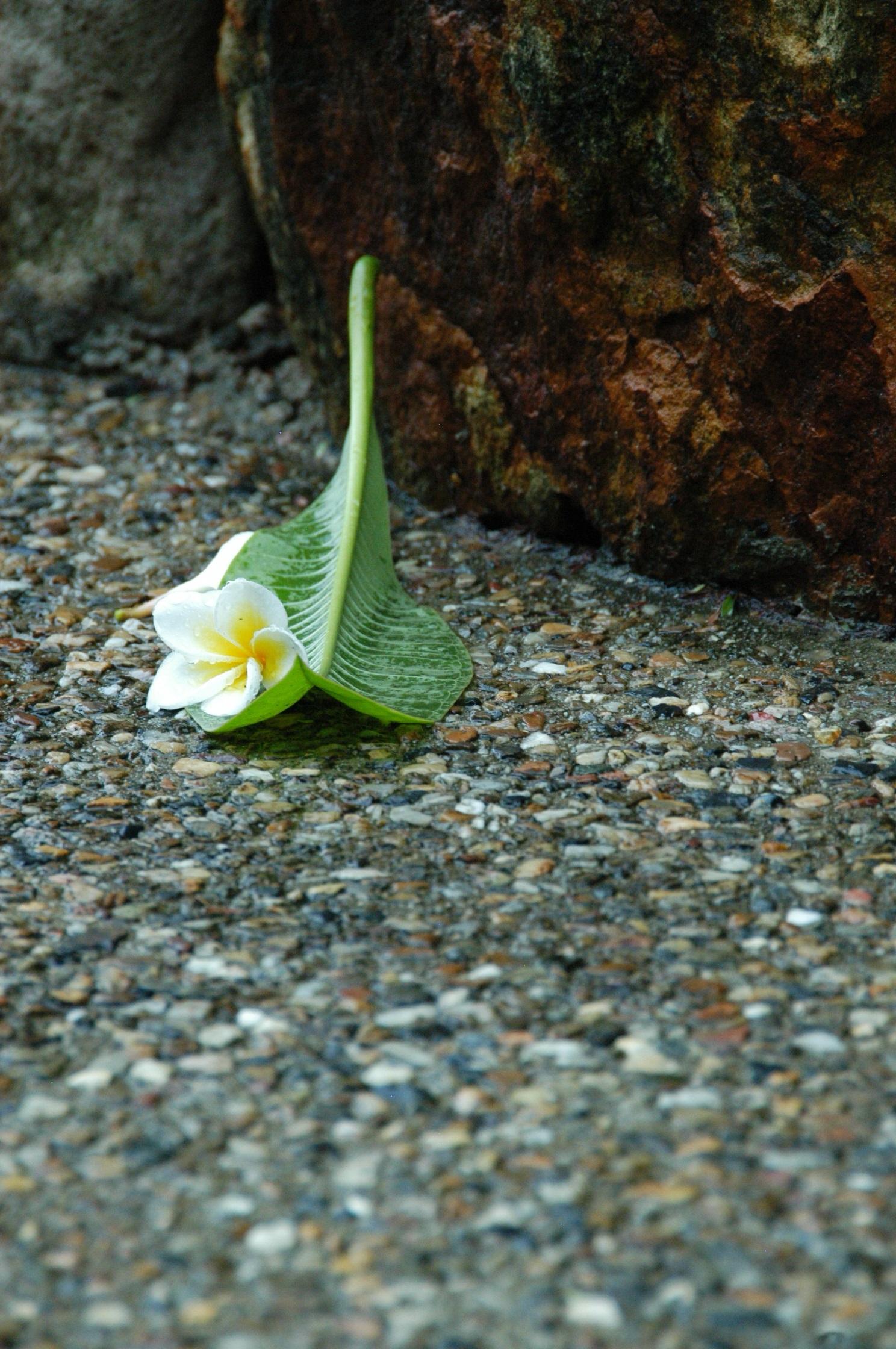 naturaleza csped planta calle lluvia hoja acera flor mojado piedra pavimento fauna silvestre patrn verde guijarro