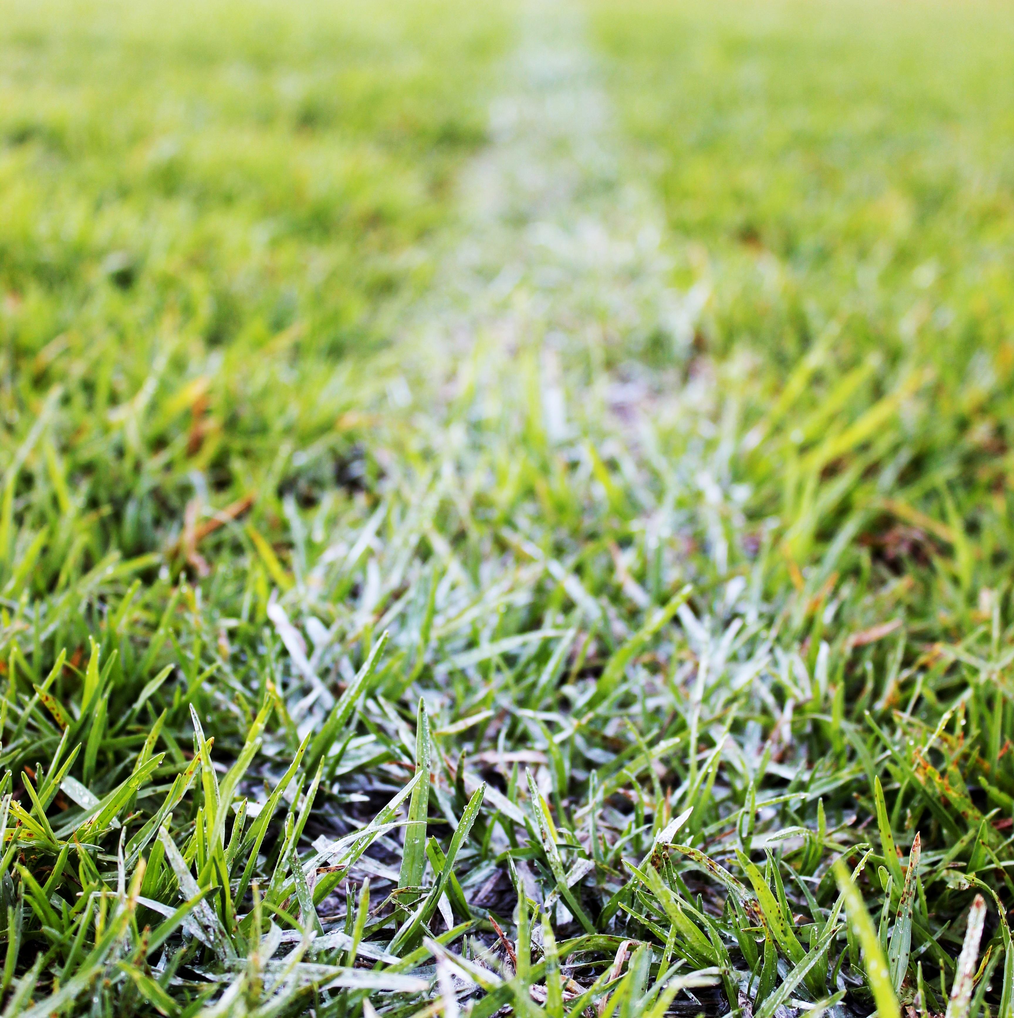 grass american football field. Nature Grass Plant Sun Sport Field Lawn Meadow Leaf Flower Summer Line Green Soil Football Stadium American