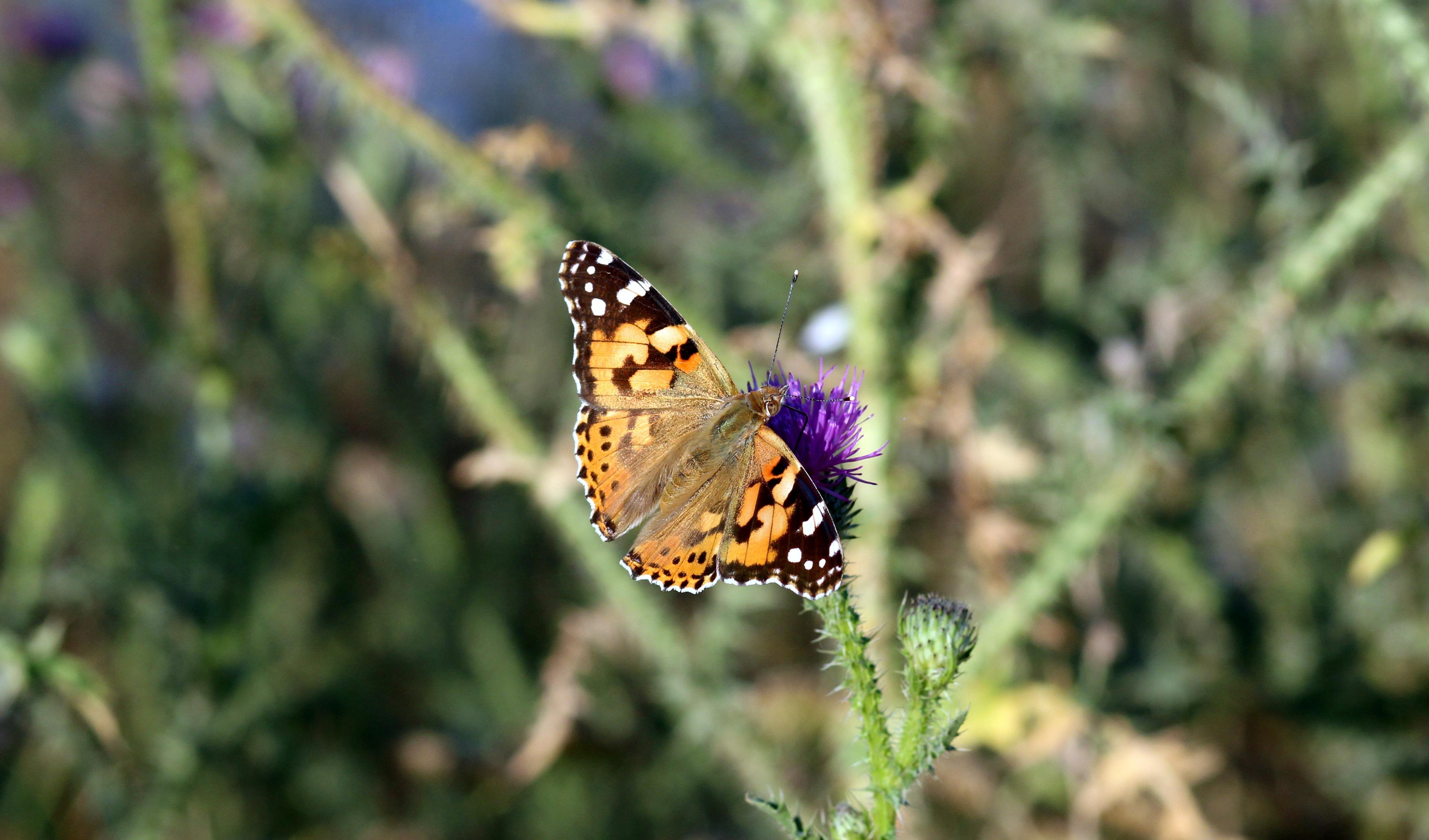 Fotograf Doga Cimen Cayir Cicek Vahsi Hayat Bocek Botanik