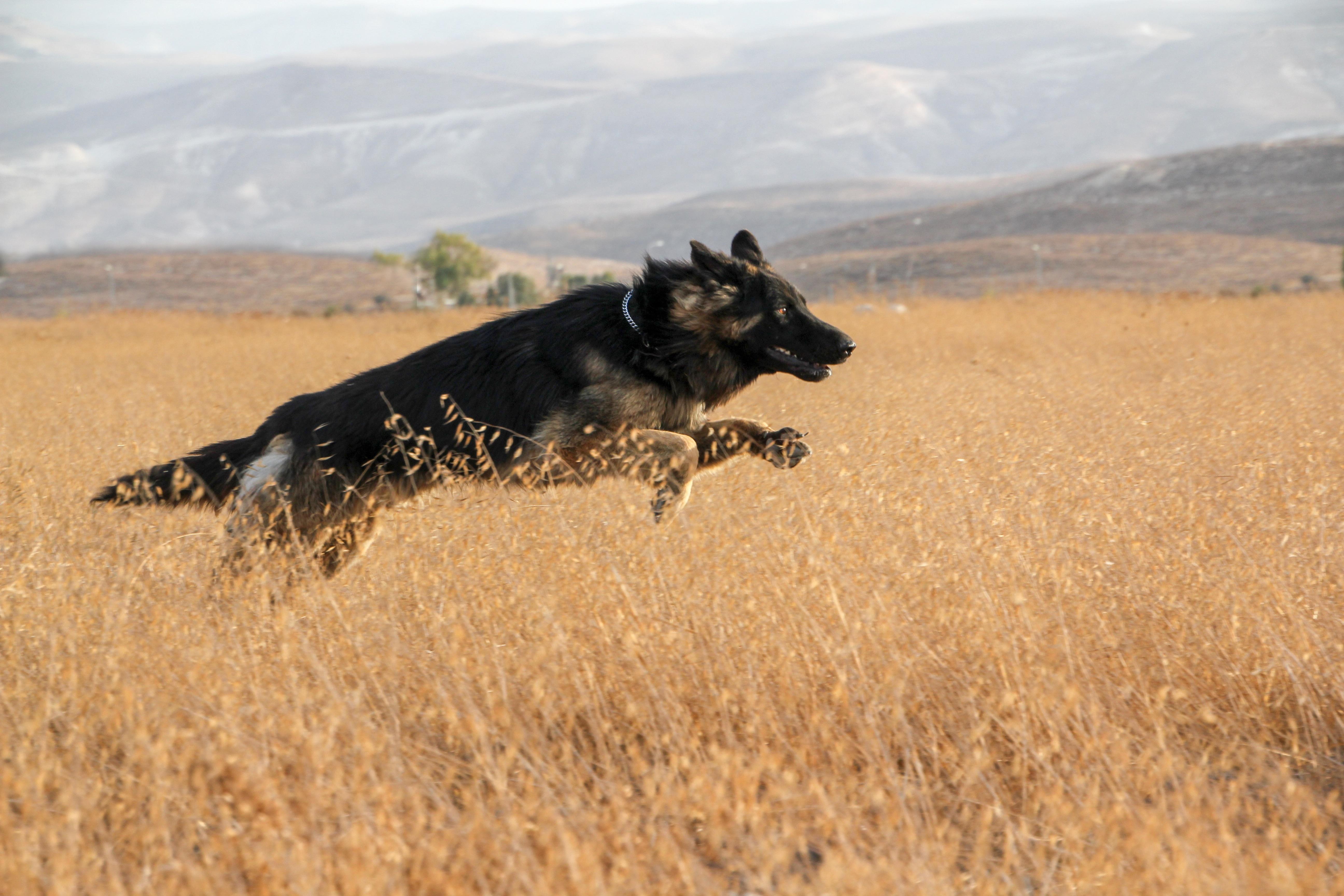 Free Images Nature Grass Prairie Play Run Cute