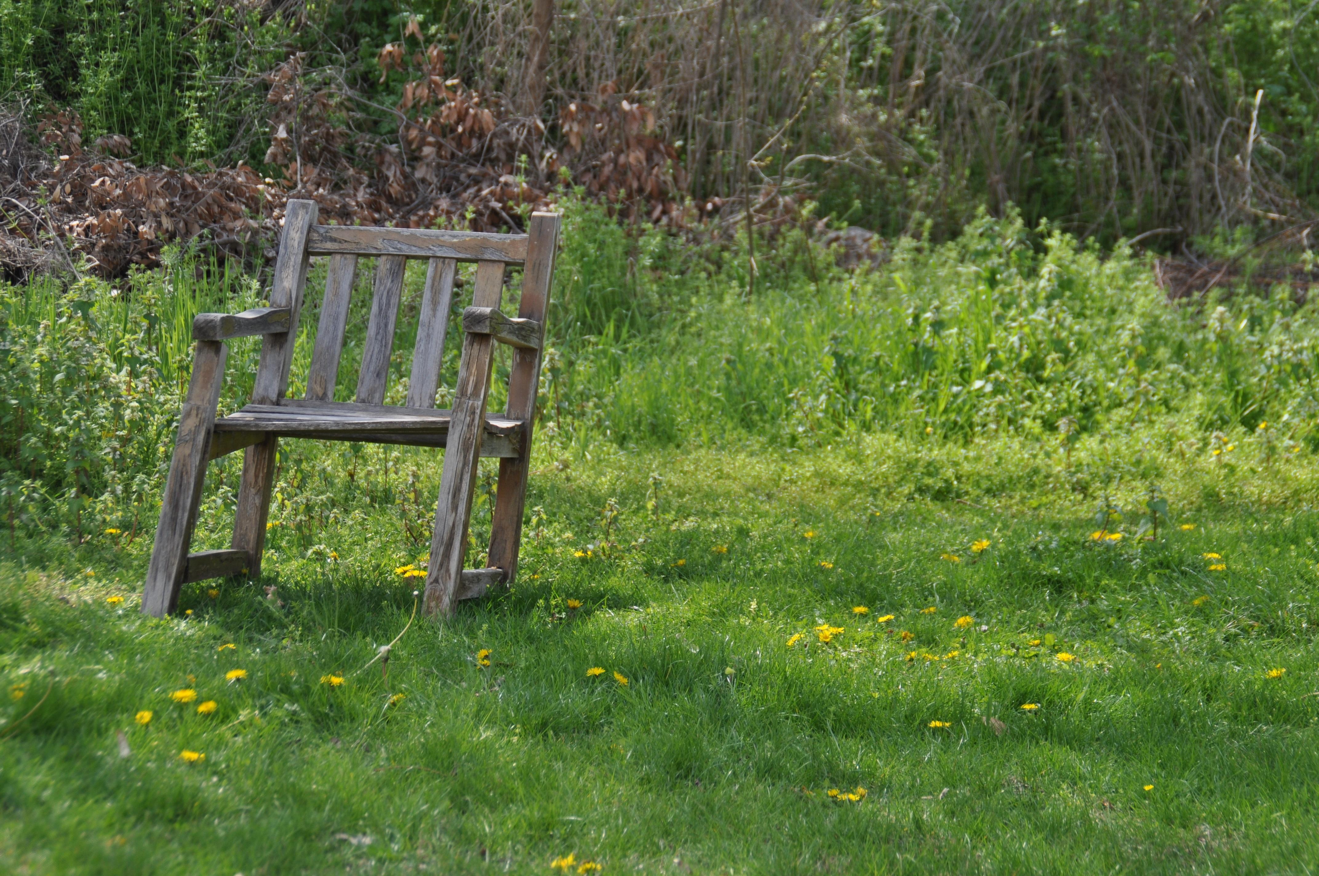 Free nature grass read lawn antique meadow prairie