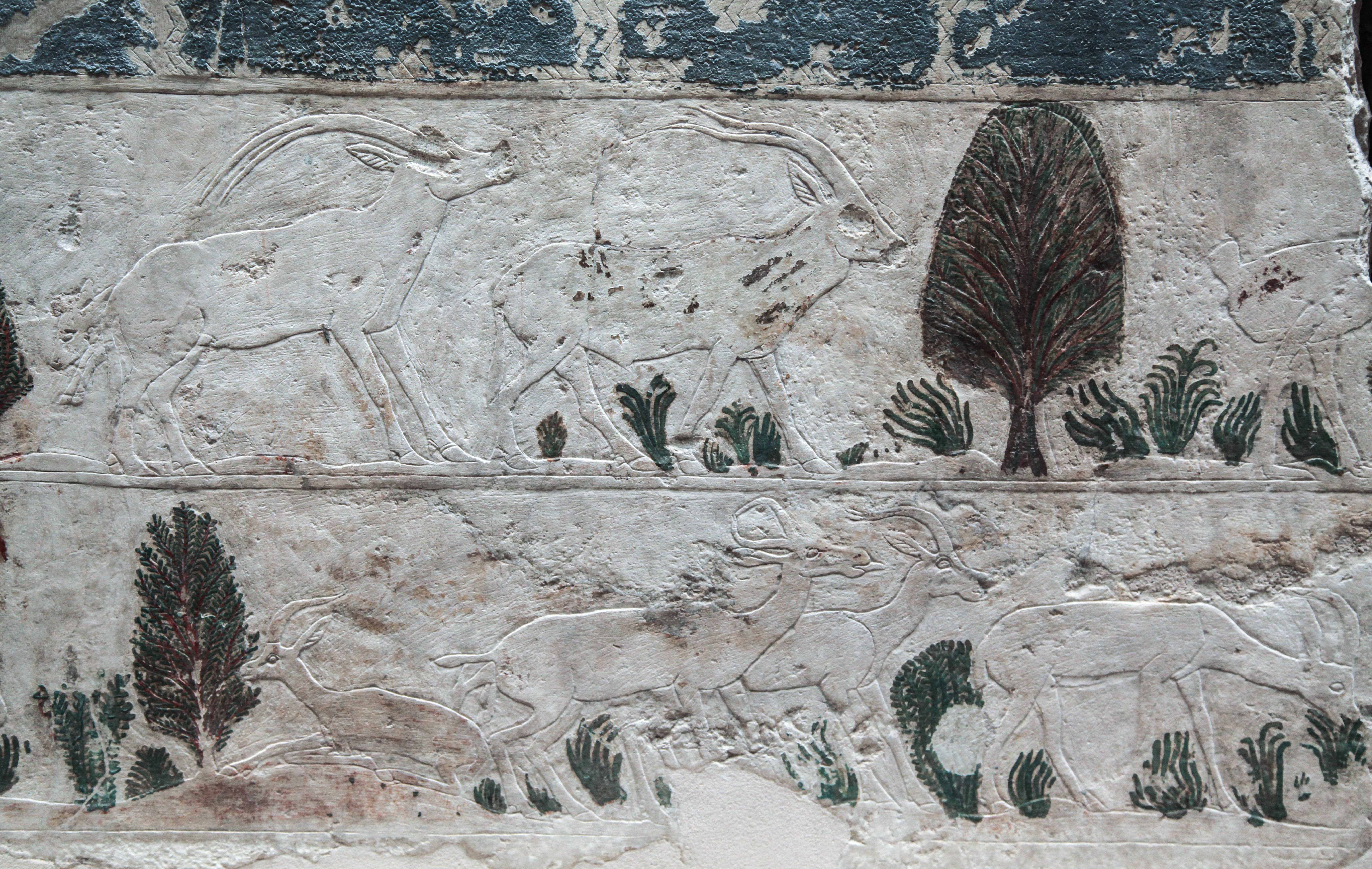 Gambar Alam Rumput Batu Jerami Bidang Tanah Pertanian
