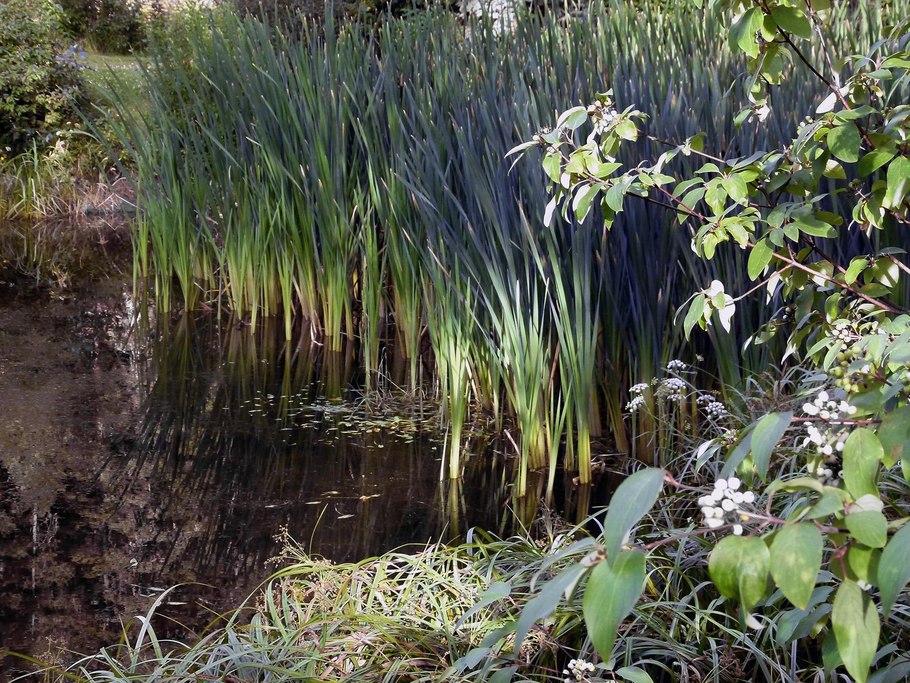 Болотные растения картинки