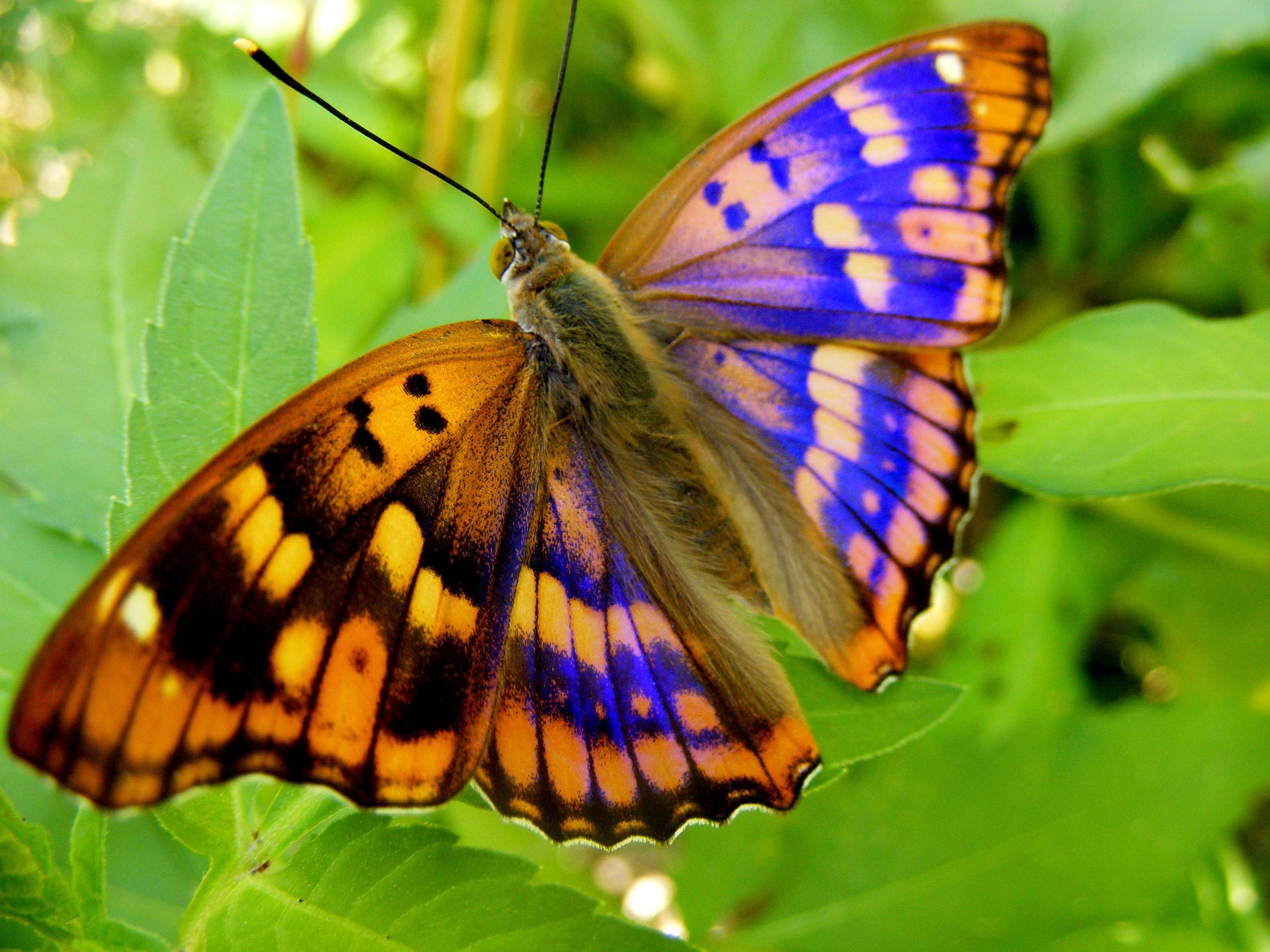 Kostenlose foto : Natur, Gras, Flügel, Blatt, Blume, Grün, Insekt ...