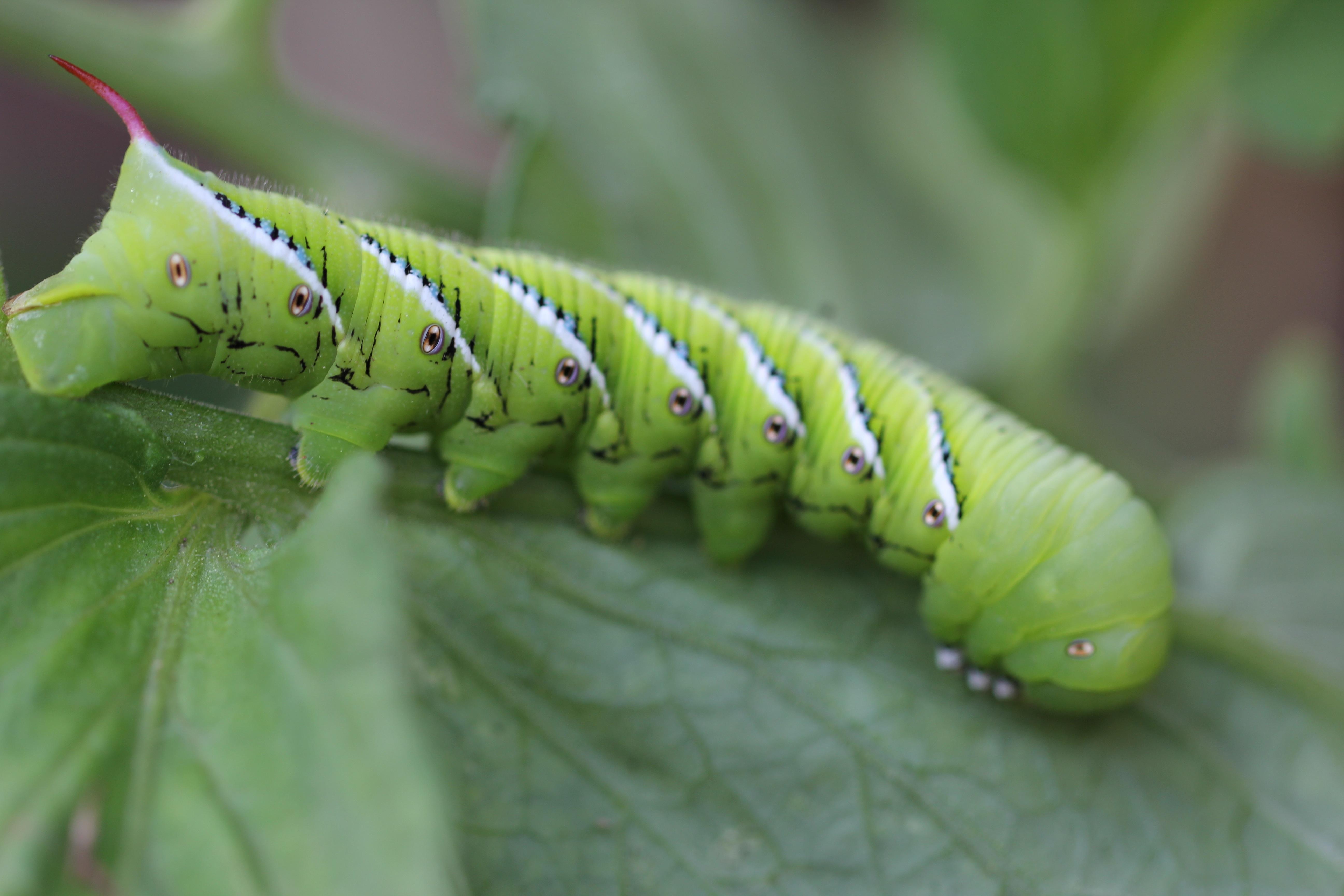 Bildet : natur, grønn, insekt, hage, fauna, virvelløse ...