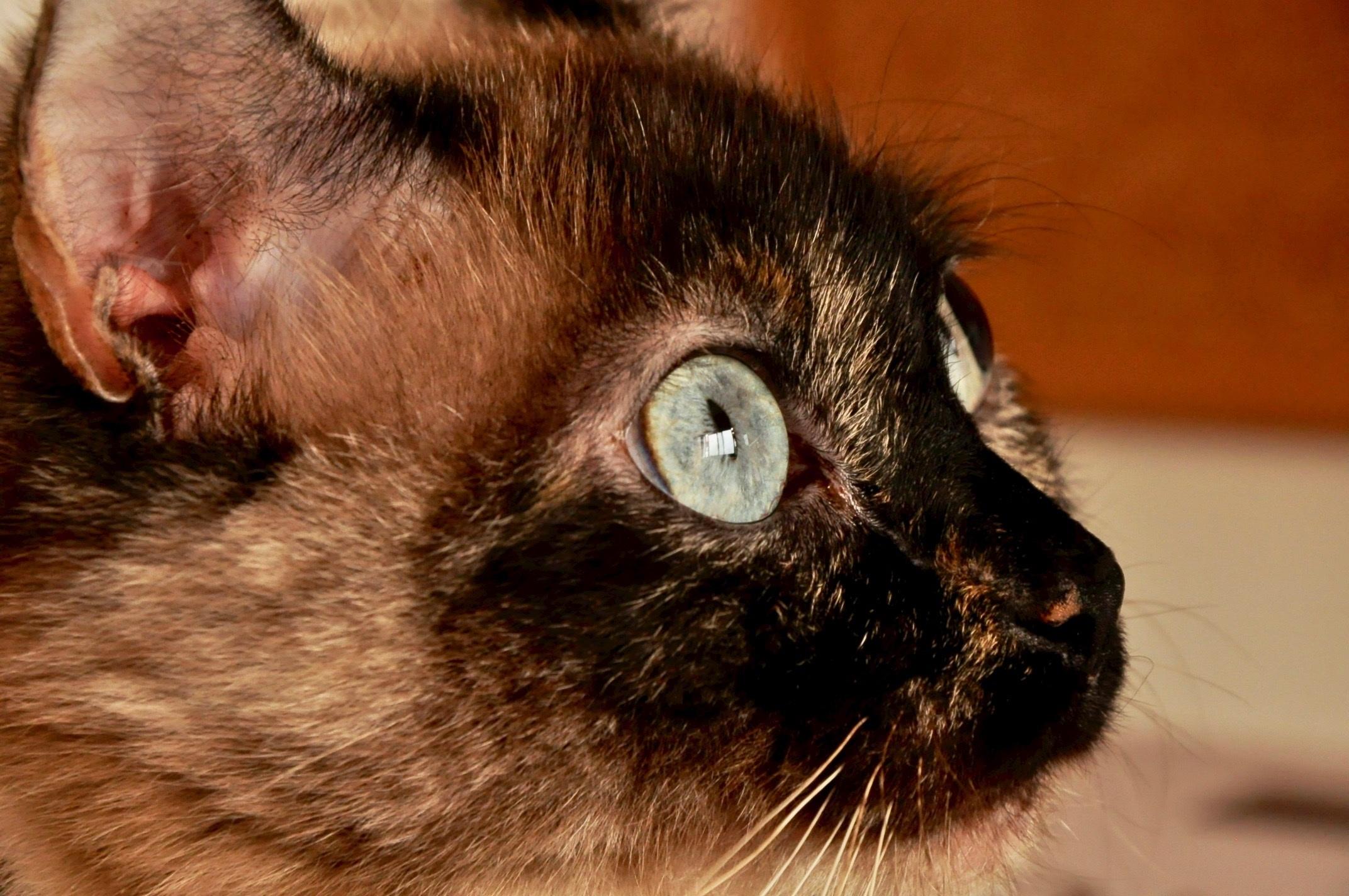 krásna mačička šírenie